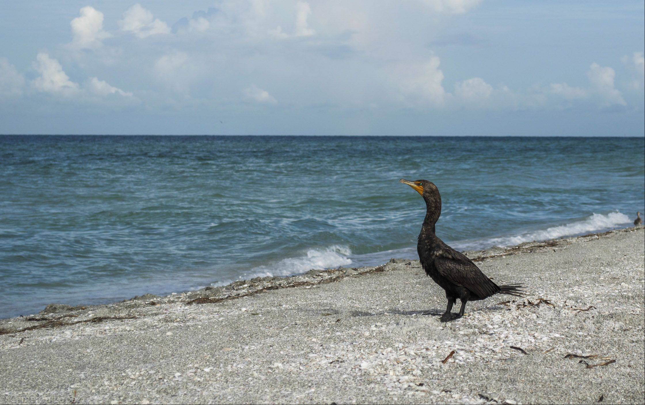 A black bird enjoys the view on the beach in Longboat Key, FL last month.