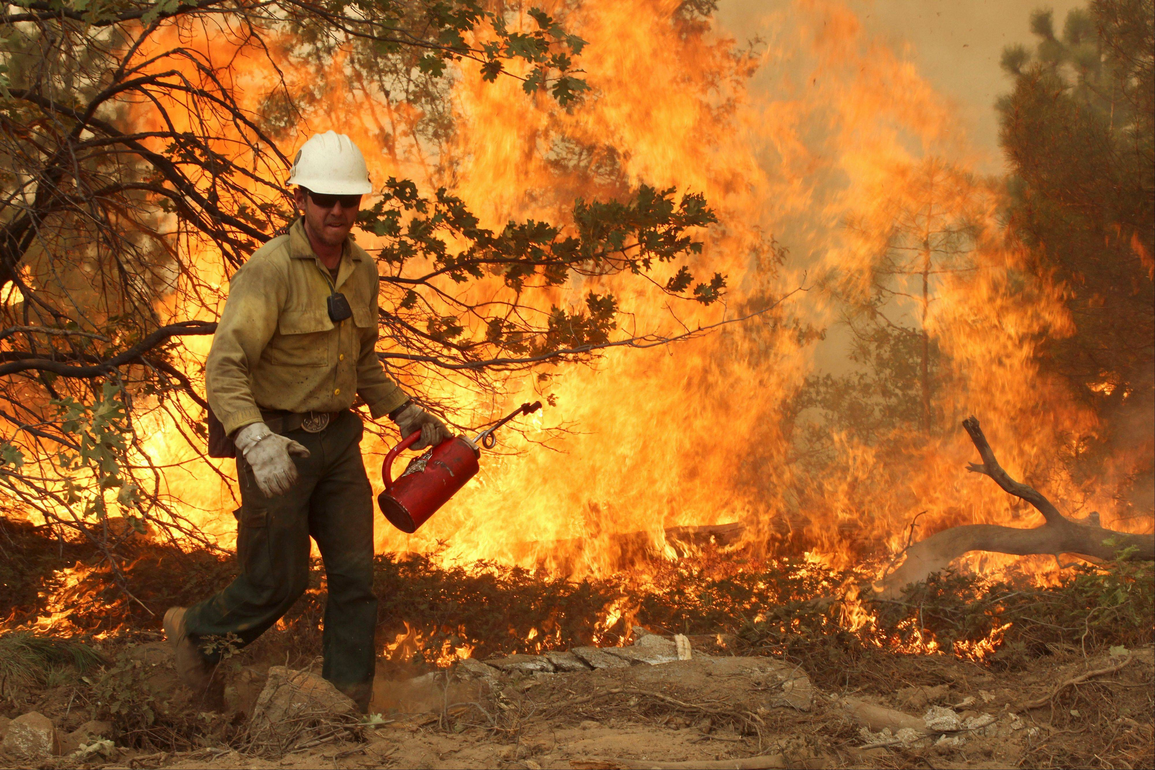 Associated Press/U.S. Forest Service A member of the BLM Silver State Hotshot crew uses a drip torch to set back fires on the southern flank of the Rim Fire in California.