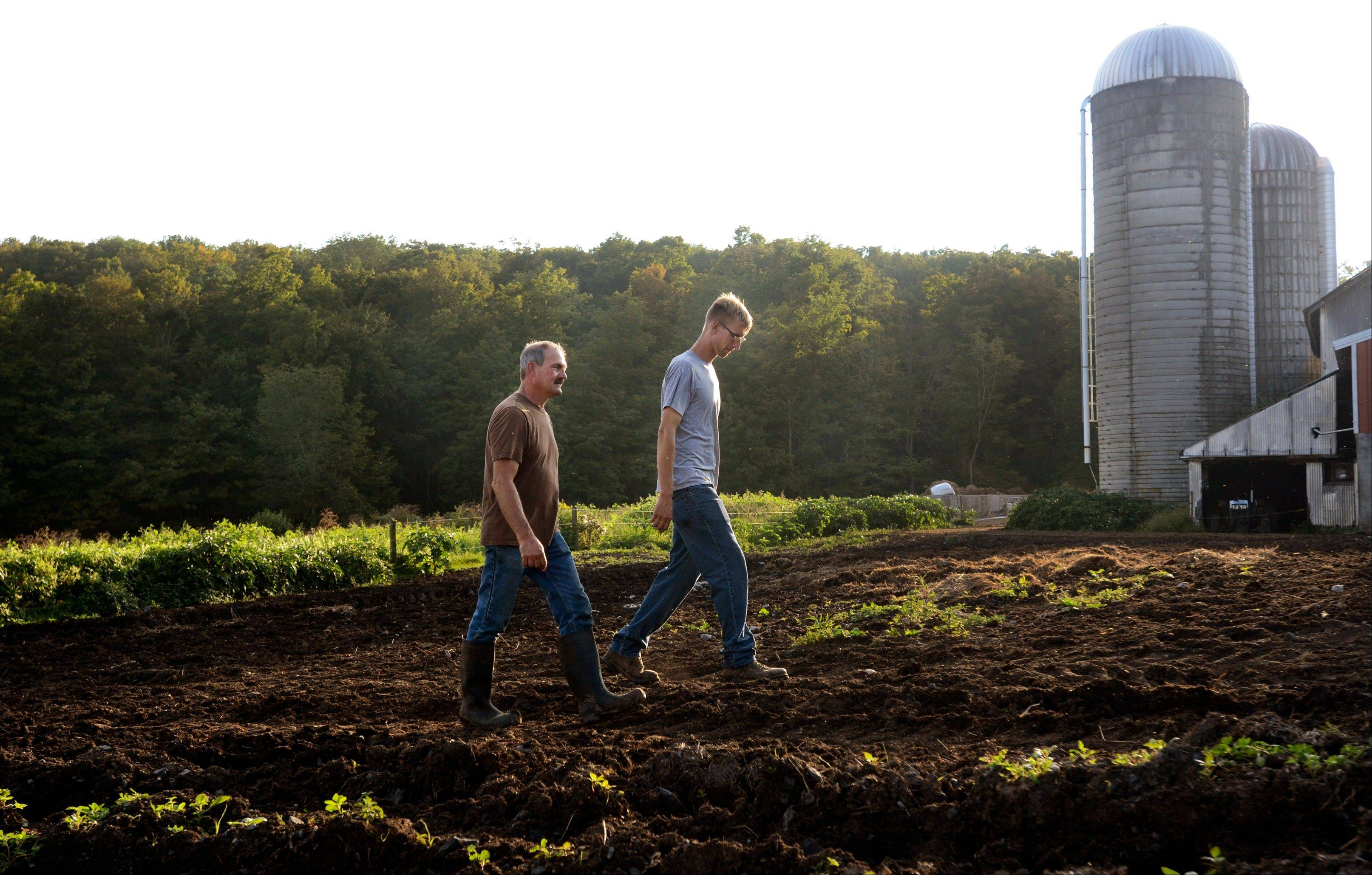 In this Aug. 29, 2013, photo, Dan Dimon, right, walks with his father-in-law, Kevin Carley, through a pasture at The Carley Farms in Pompey, N.Y. Dimon is in the process of buying the dairy and agricultural farm that has been in the Carley family since 1938, in phases.