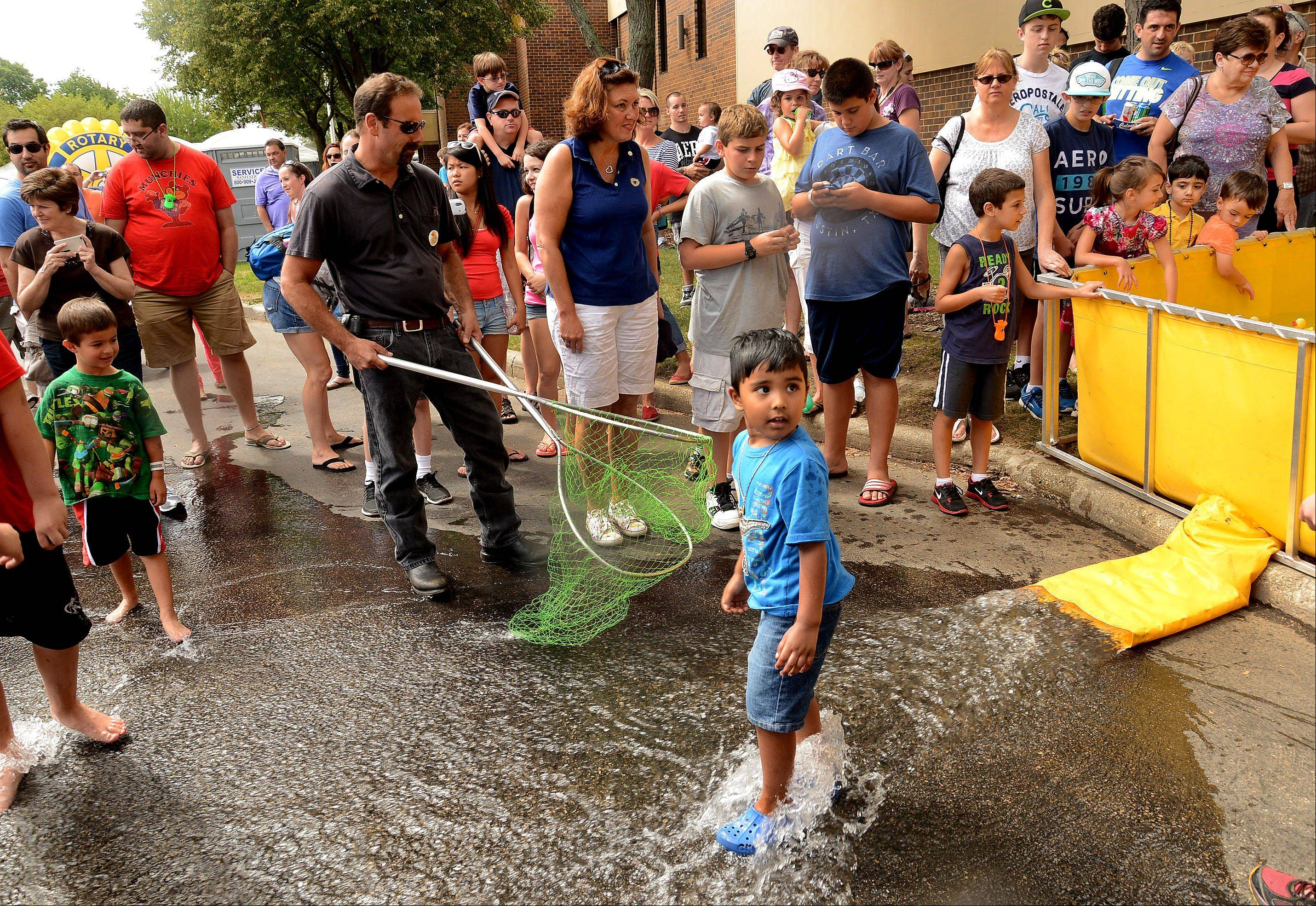 4-year-old Vedanth Menon of Buffalo Grove wades in the water while waiting for the ducks to flow out of the pond during the Rotary Rubber Duck race held on the fifth and final day of Buffalo Grove Days.