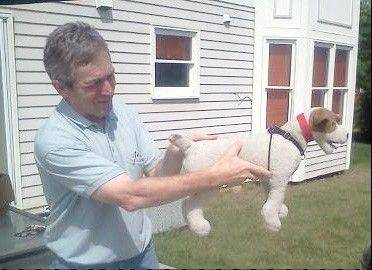 Since it is illegal for him to perform his adjustments on animals in Illinois, chiropractor Daniel Kamen of Buffalo Grove uses this stuffed dog to show the thumb pressure he uses to improve a dog's bladder control.