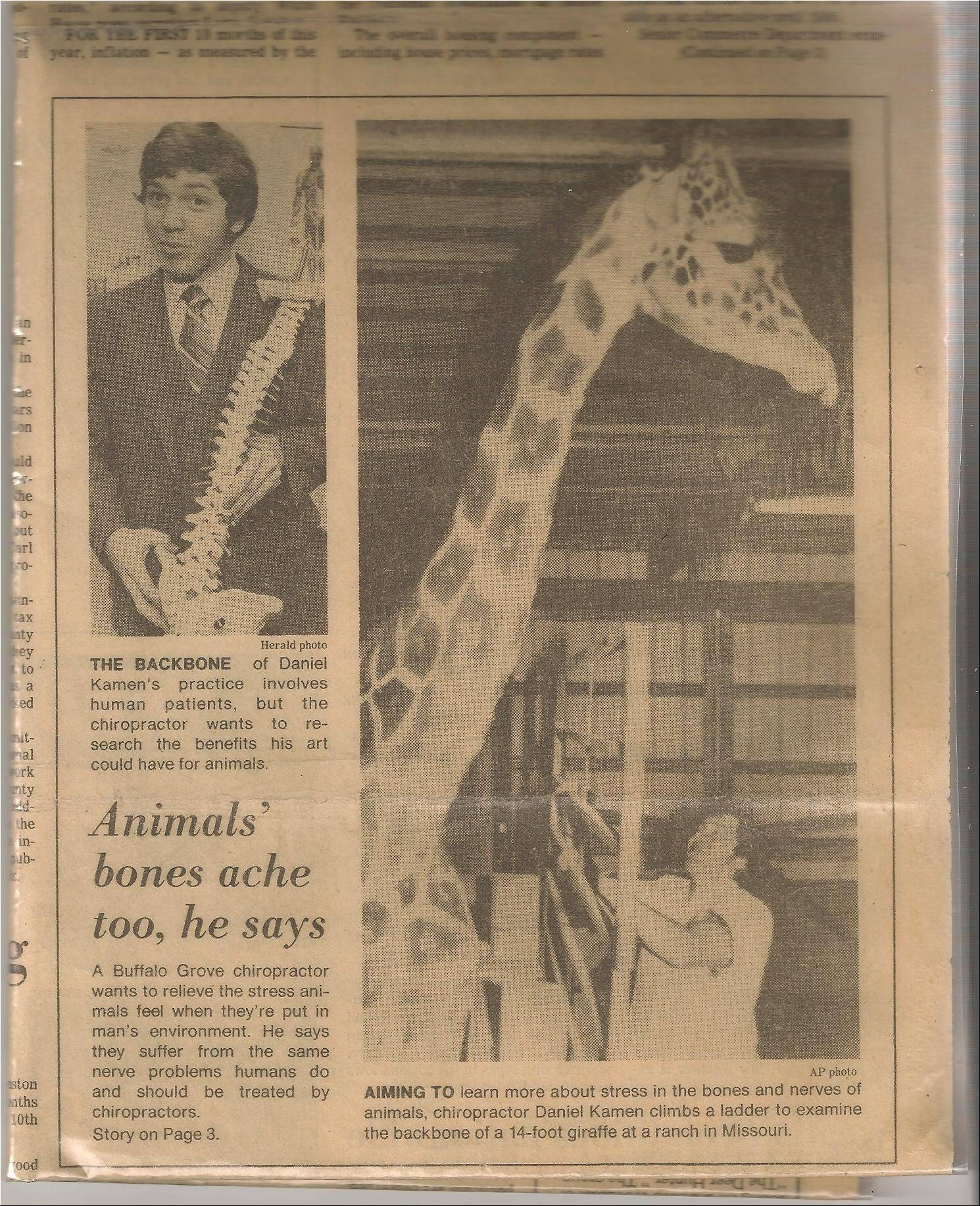This old Daily Herald clip shows Buffalo Grove chiropractor Daniel Kamen working on the neck of a giraffe at an animal park in Missouri. The giraffe ended up doing a job on Kamen when it knocked him off his ladder.