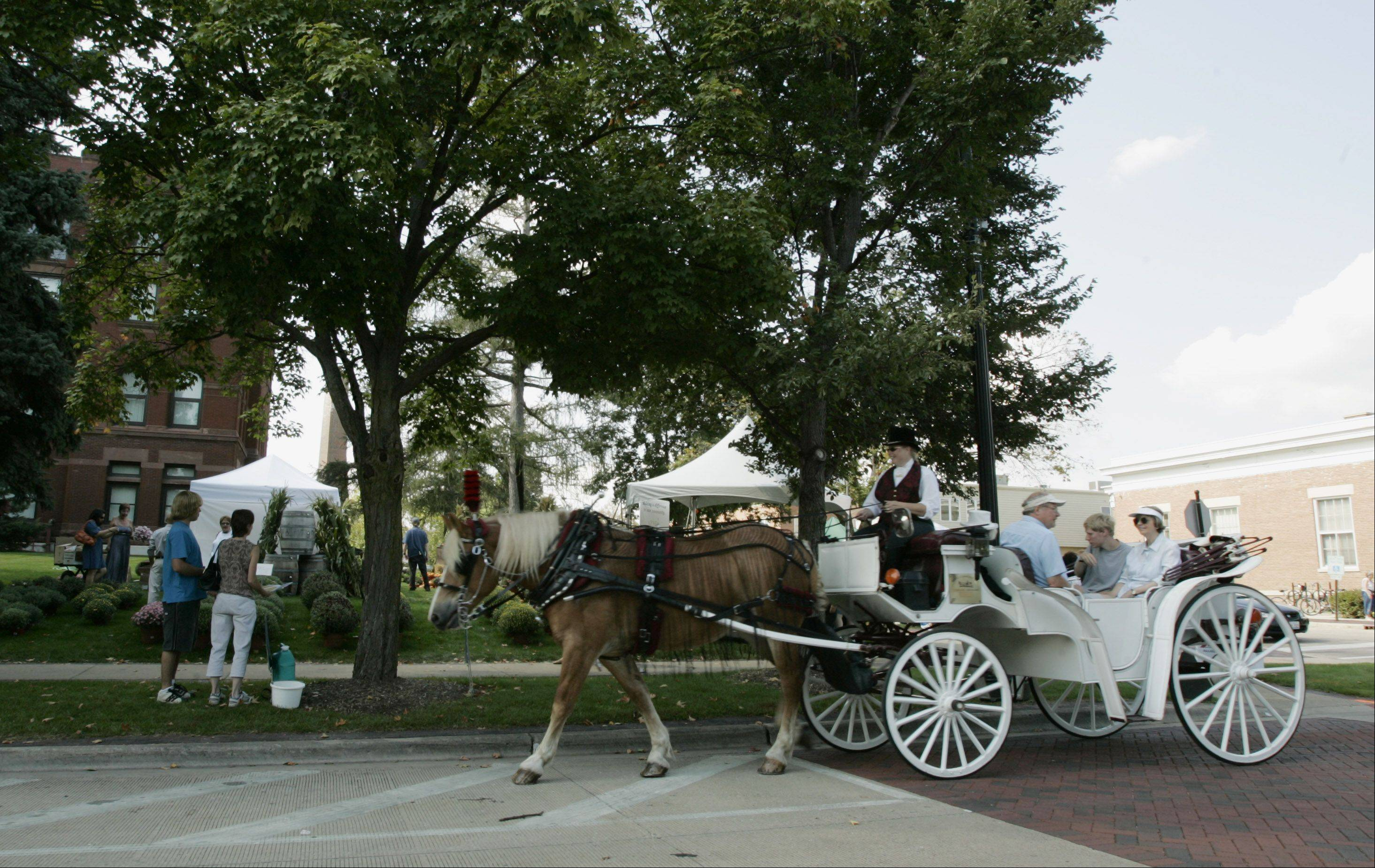 Free horse-drawn antique carriage rides will be offered at Geneva's Festival of the Vine.