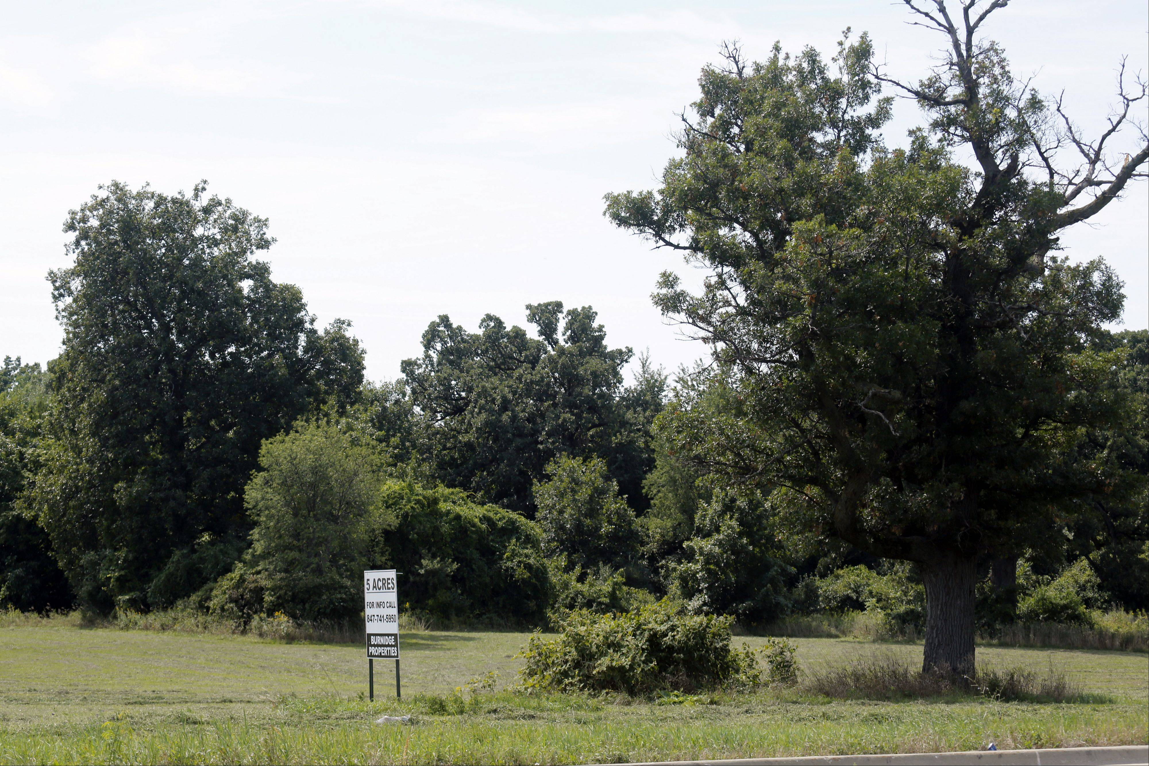 Plans for a Subaru auto dealership at 1500 Randall Road in Elgin include saving a 200-year-old white oak tree.
