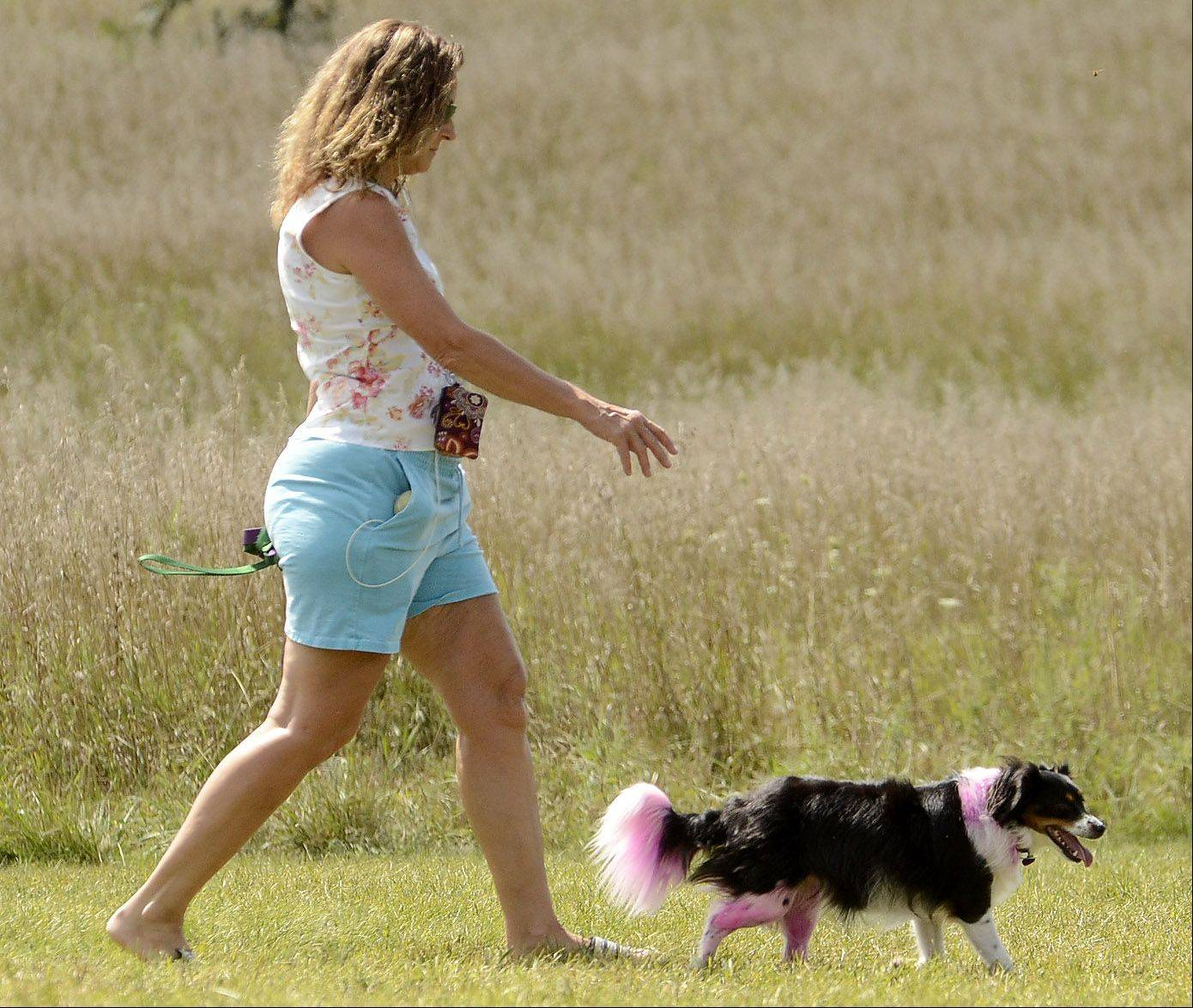 Jill Cooper, of Wauconda, walks her daughter's dog, Puddles, in the Lakewood Dog Exercise Area. Jill's daughter Kristen fosters and rescues dogs from shelters. Kristen also decided it would be a good idea to use some leftover hair dye to color Puddles pink.