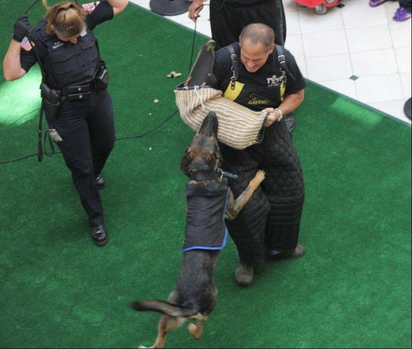 K-9 demonstrations were part of last year's Law Enforcement Expo at Westfield Hawthorn Mall in Vernon Hills.