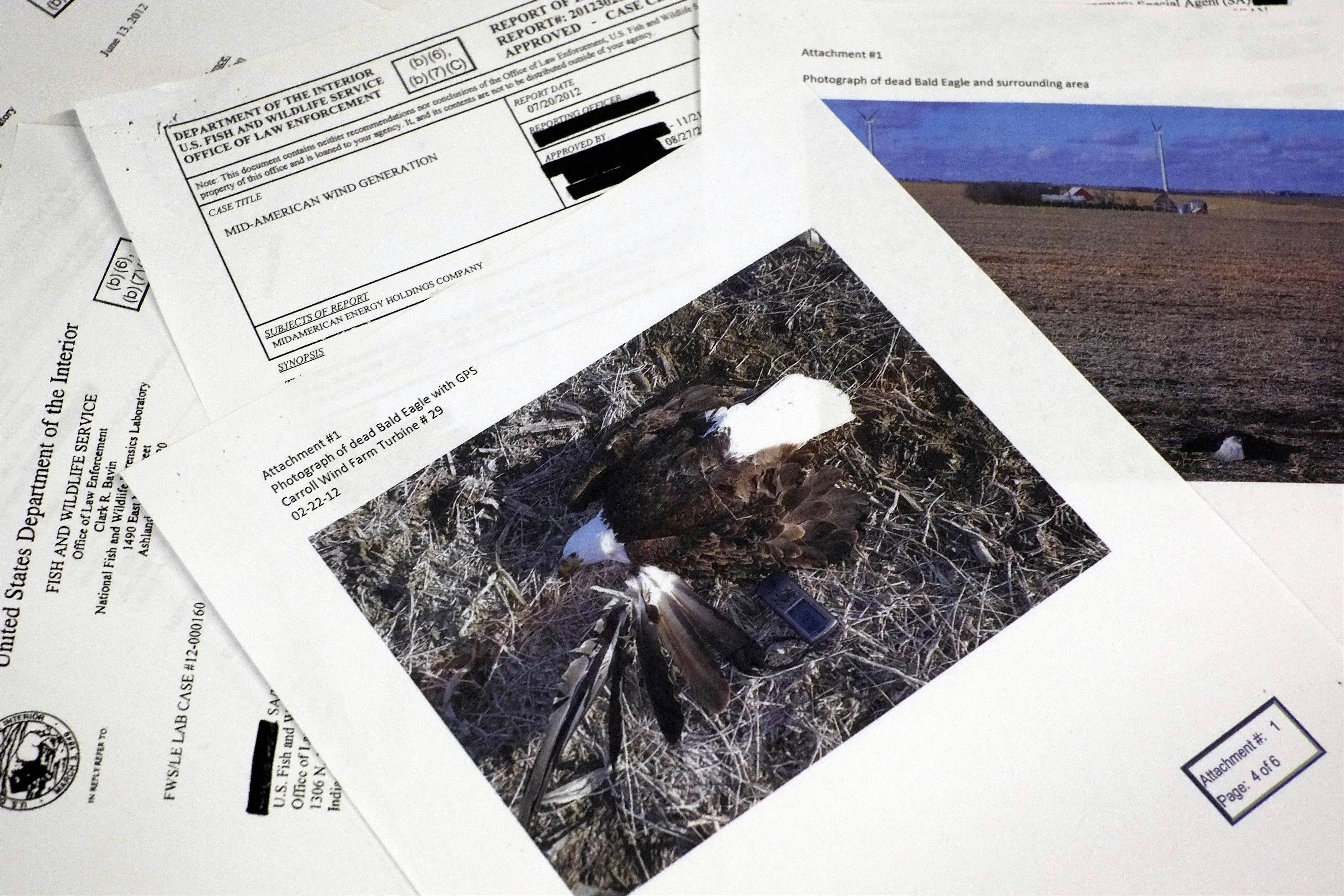 Pages from a U.S. Fish and Wildlife Office of Law Enforcement document obtained with a Freedom of Information Act request by the Associated Press in the investigation of a dead bald eagle the reports says was found at the Carroll Wind Farm in Carroll, Ia.