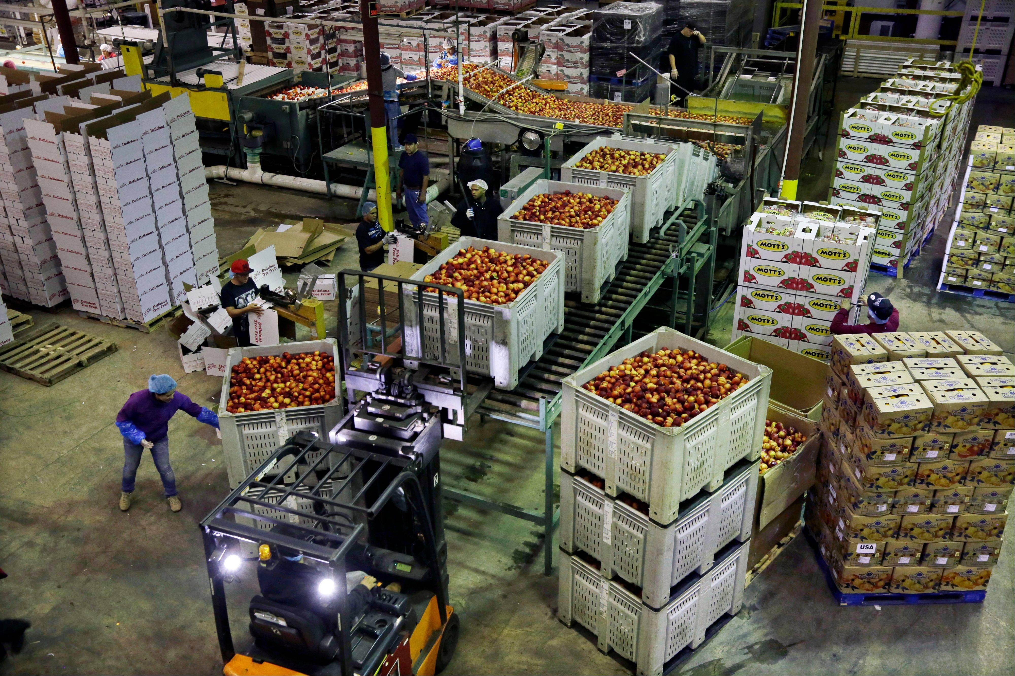 Workers load large containers of nectarines for sorting at Eastern ProPak Farmers Cooperative in Glassboro, N.J. Higher energy costs pushed U.S. wholesale prices up 0.3 percent last month. Prices rose a modest 1.4 percent over the past year, the lowest one-year gain since April.