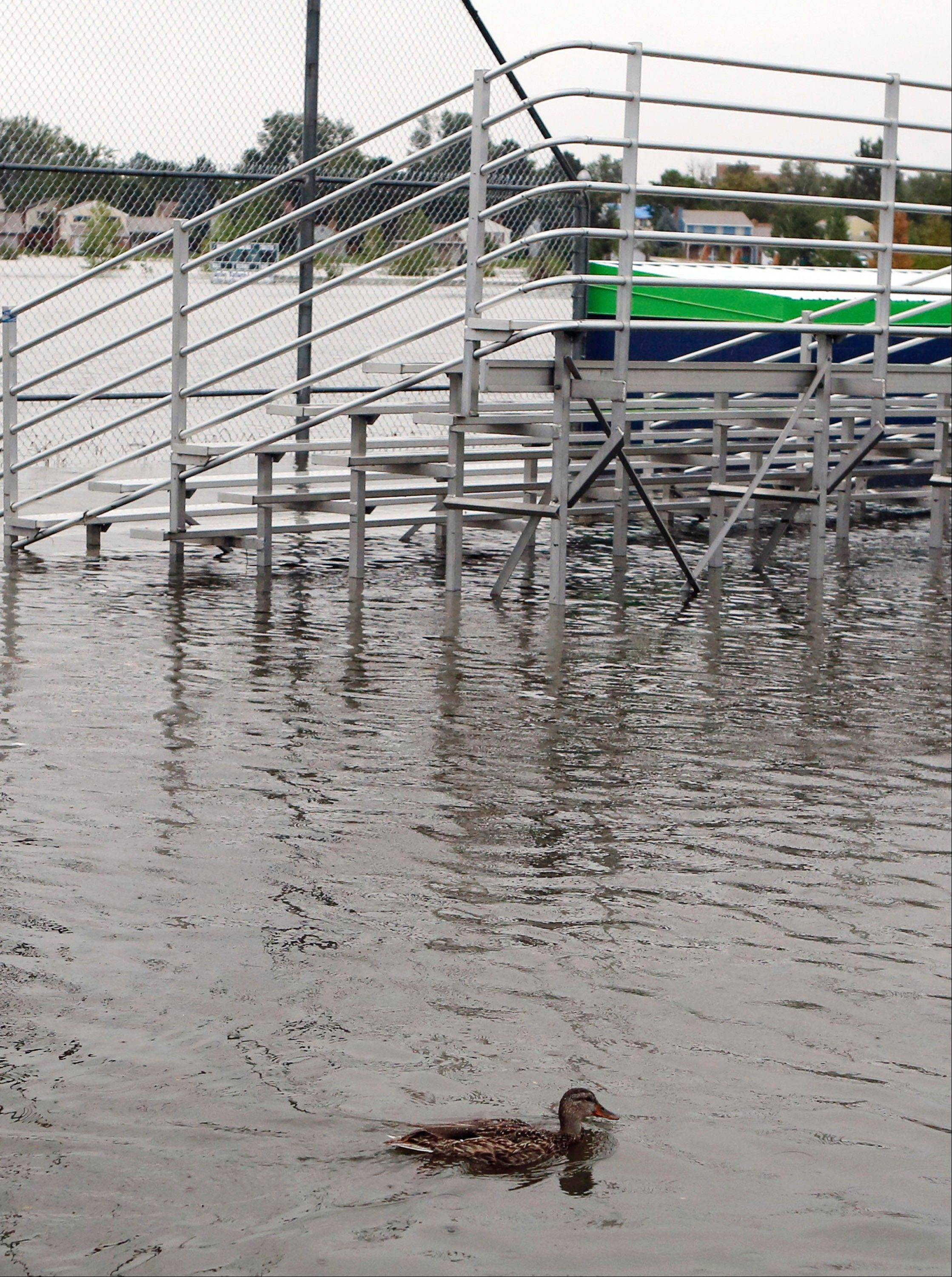 A duck swims near bleachers at Utah Park on Thursday, Sept. 12, 2013, in Aurora, Colo. The park was under water Thursday due to flooding. Flash flooding in Colorado has cut off access to towns, closed the University of Colorado in Boulder and left at least three people dead.