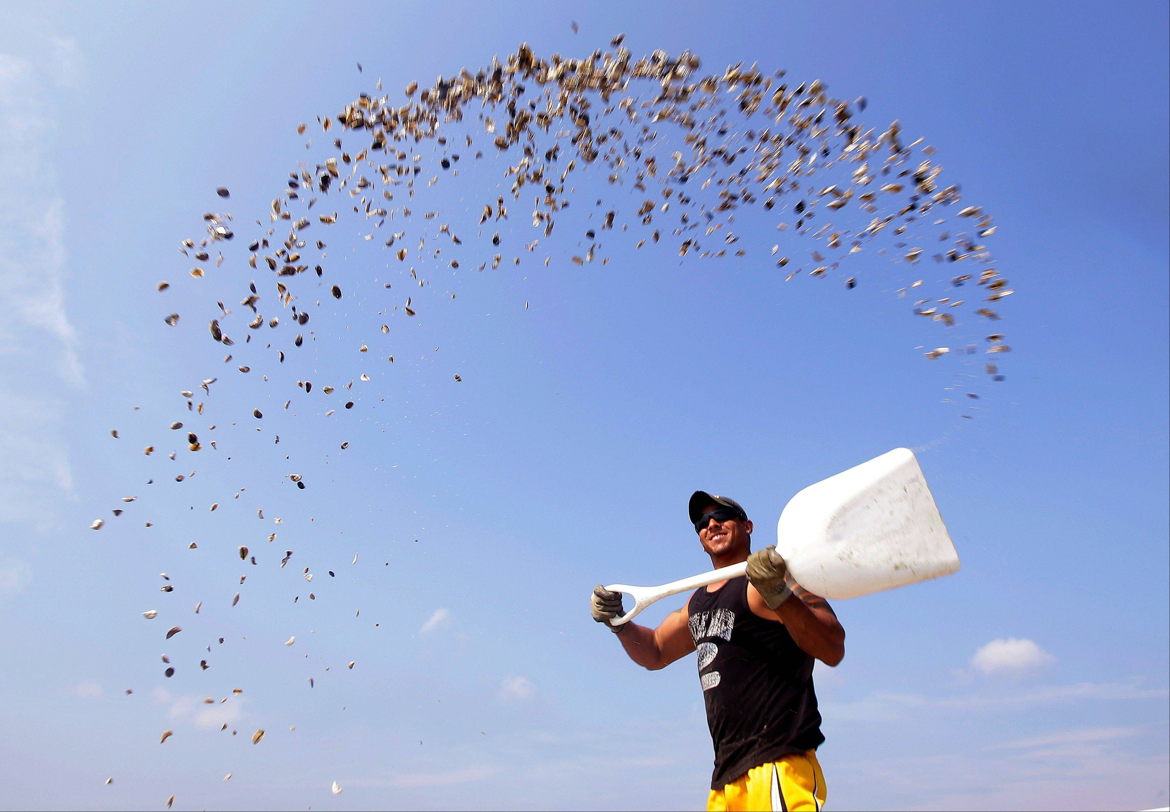 Jason Costa, an employee of Merry's Oysters, broadcasts oyster seed from a boat Thursday into Duxbury Bay in Duxbury, Mass.