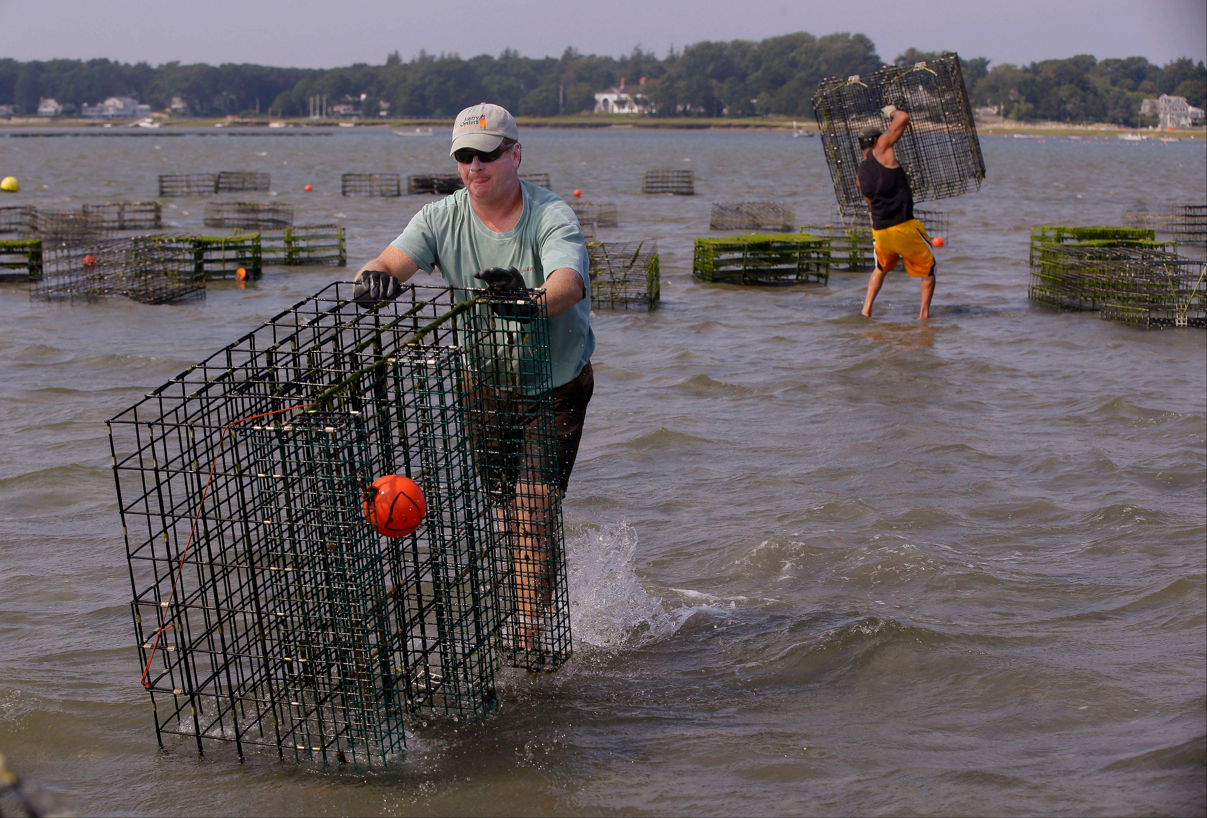 Merry, left, and Costa bring oyster cages back to their boat.