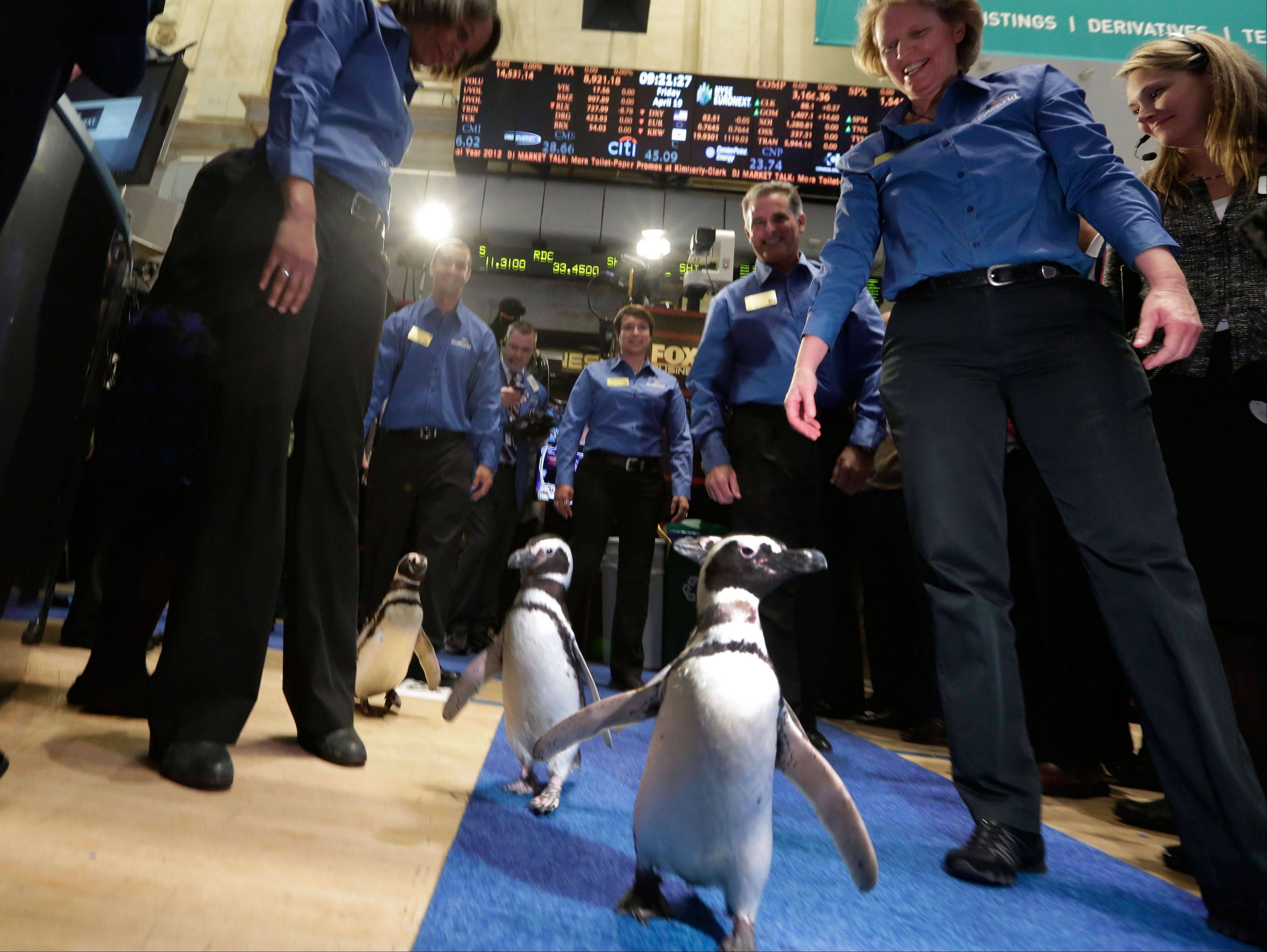Associated Press/April 19, 2013 Penguins from SeaWorld are escorted by their handlers on the floor of the New York Stock Exchange during the company�s IPO, in New York.