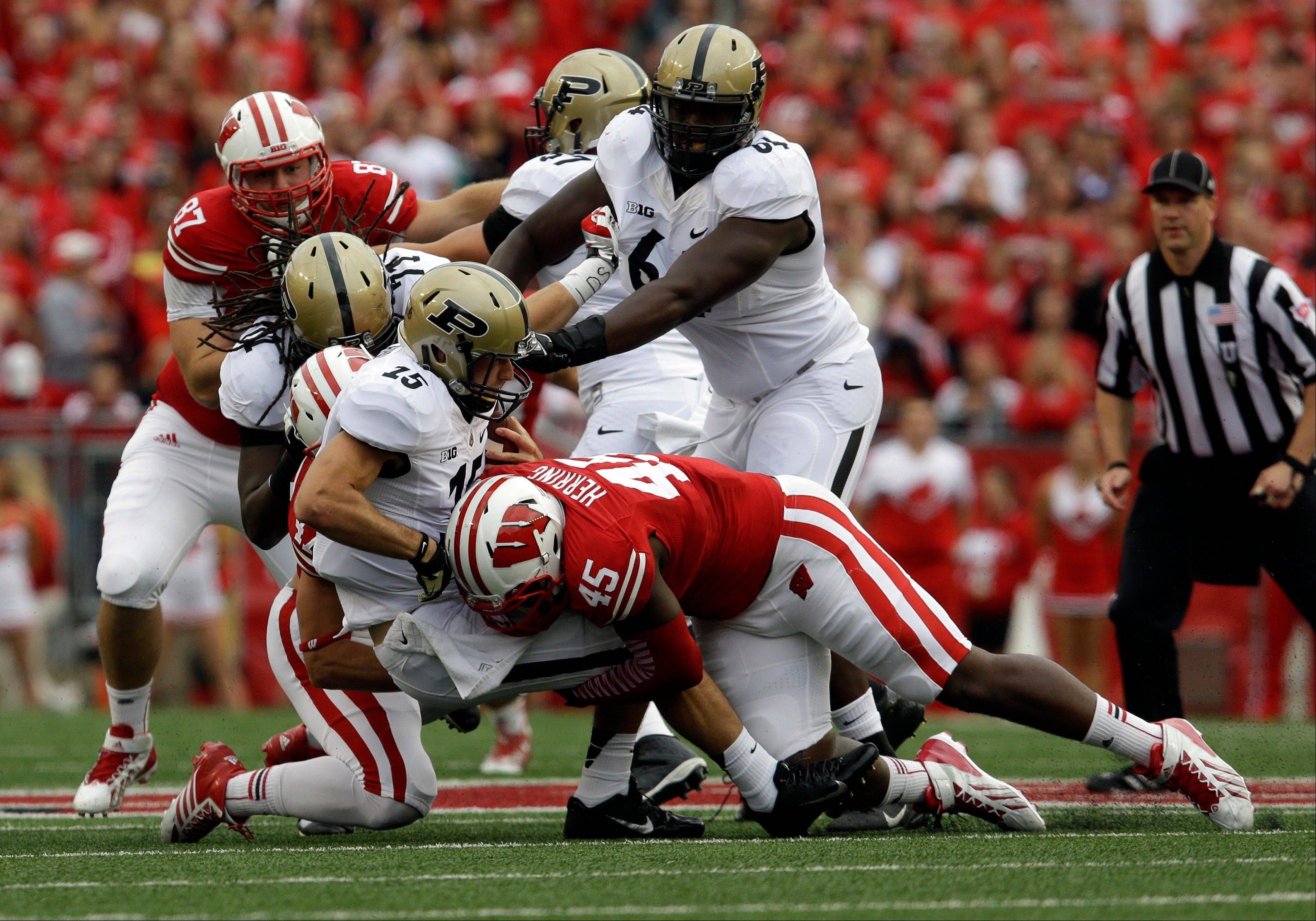 Wisconsin's Warren Herring sacks Purdue quarterback Rob Henry during the first half of Saturday's game in Madison, Wis. This week against Ohio State, the Badgers would like nothing better than for their big guys up front to decide the game.