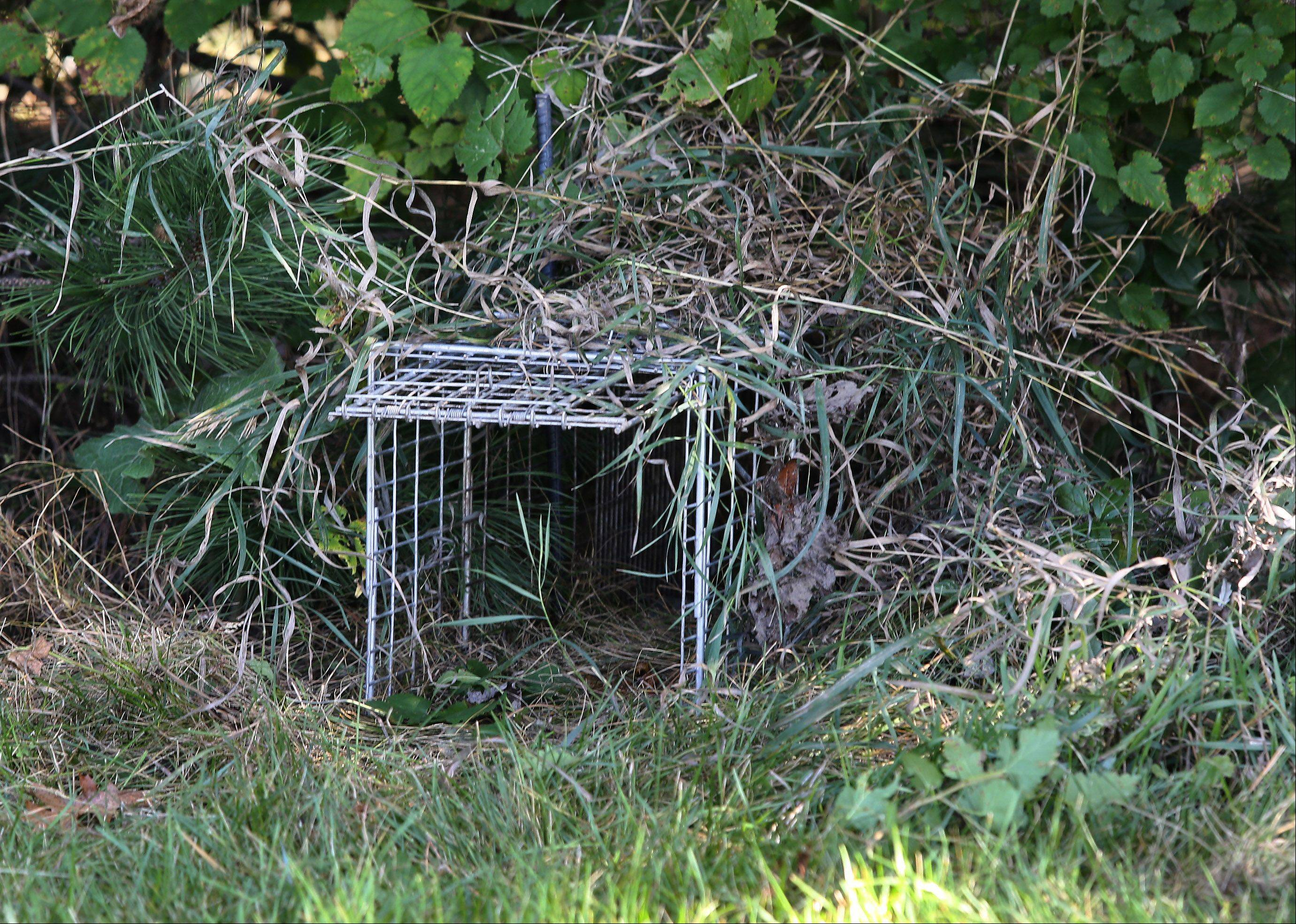 A trap set for skunks by John Dynek of JD's Wildlife Services in Deerpath Park in Vernon Hills on Monday. The village and the Vernon Hills Park District have joined forces to hire the trapper to thin the skunk population in town.