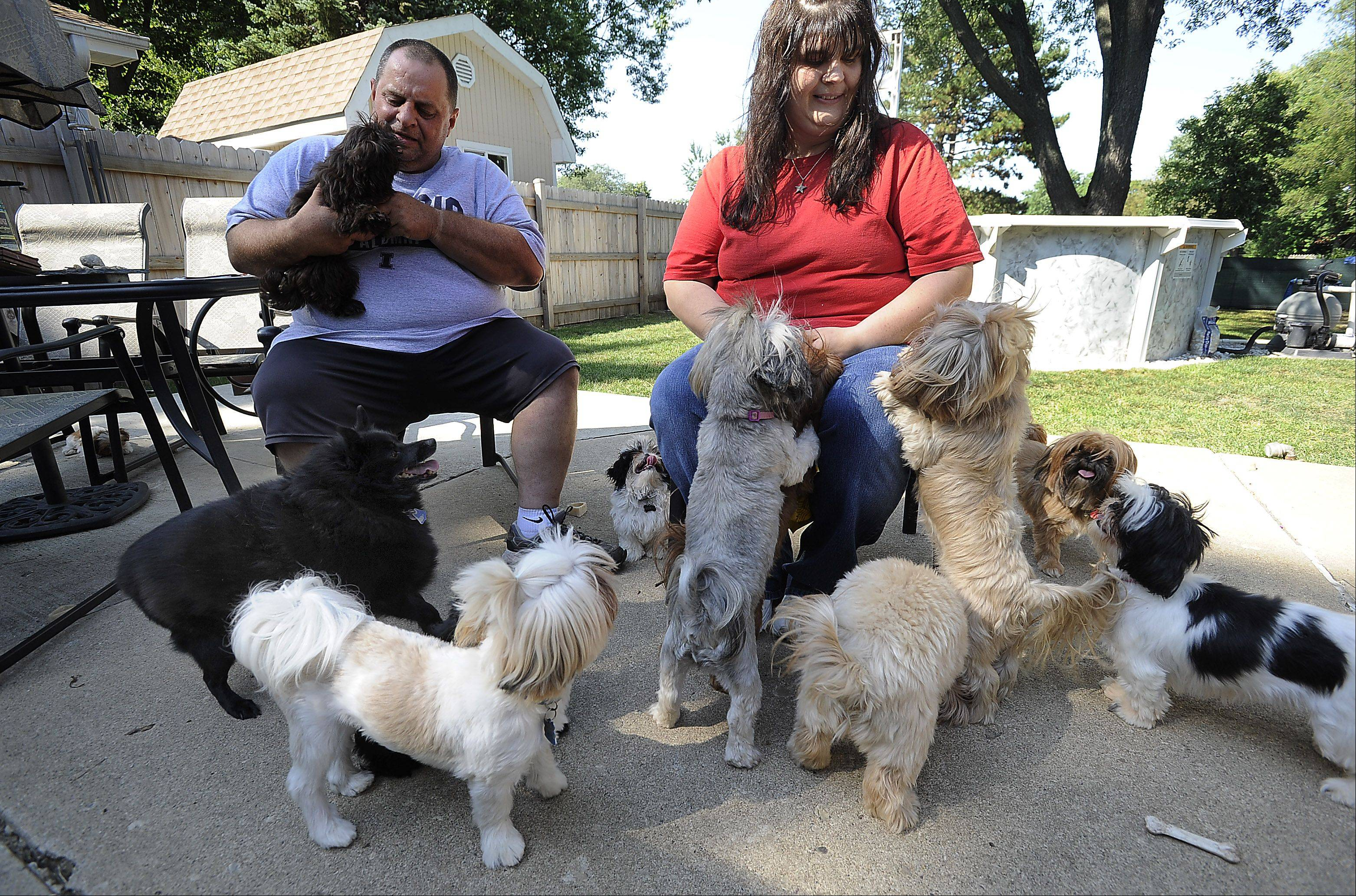 Cindy and Kent Weik of Elk Grove Village own 12 dogs, including eight female and two male Shih Tzus they have been breeding since 2009. An updated village ordinance permits two animal litters per year per household -- regulations the Weiks say they are prepared to fight.