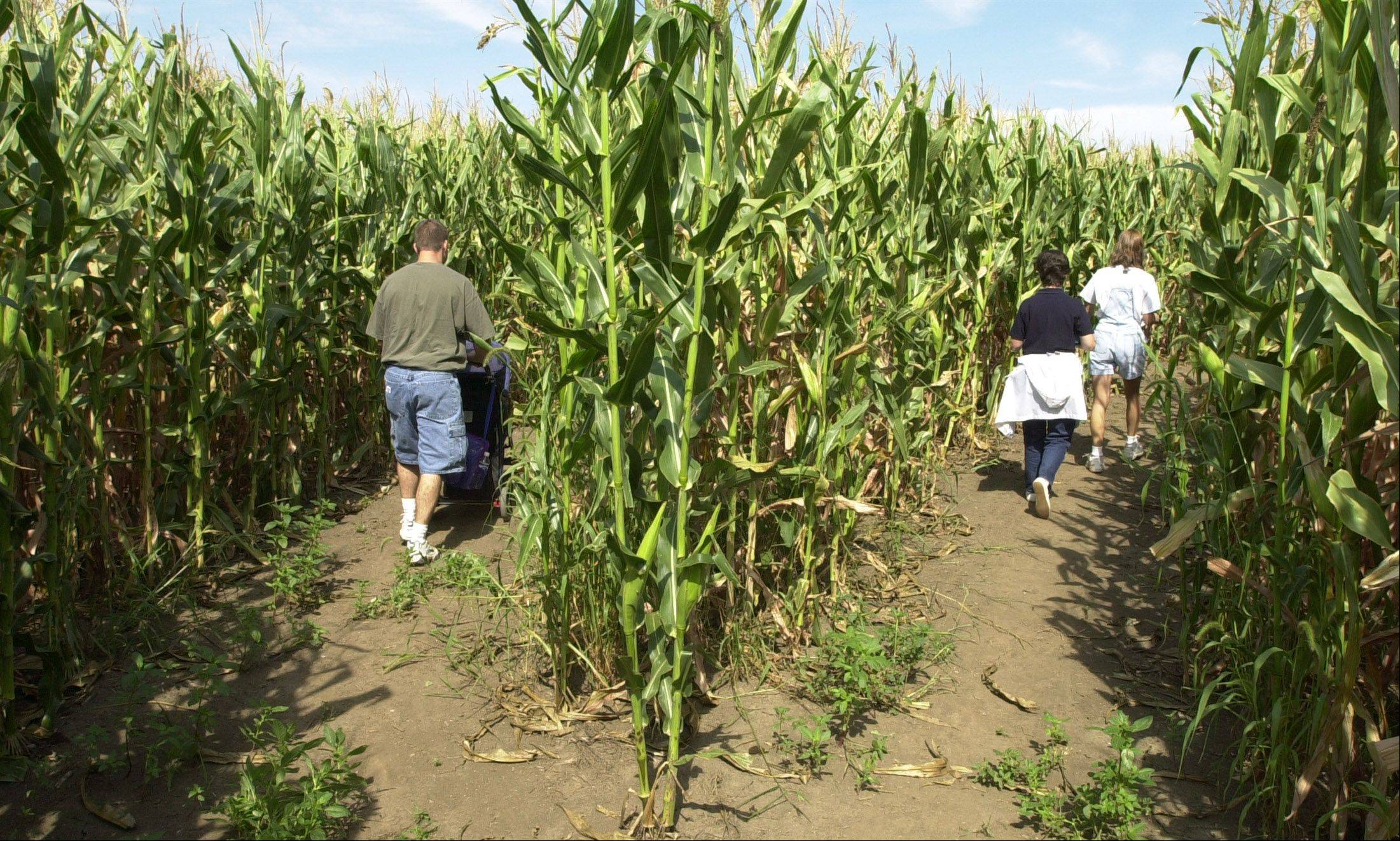 Richardson Farm's maze in Spring Grove goes on for 33 acres.