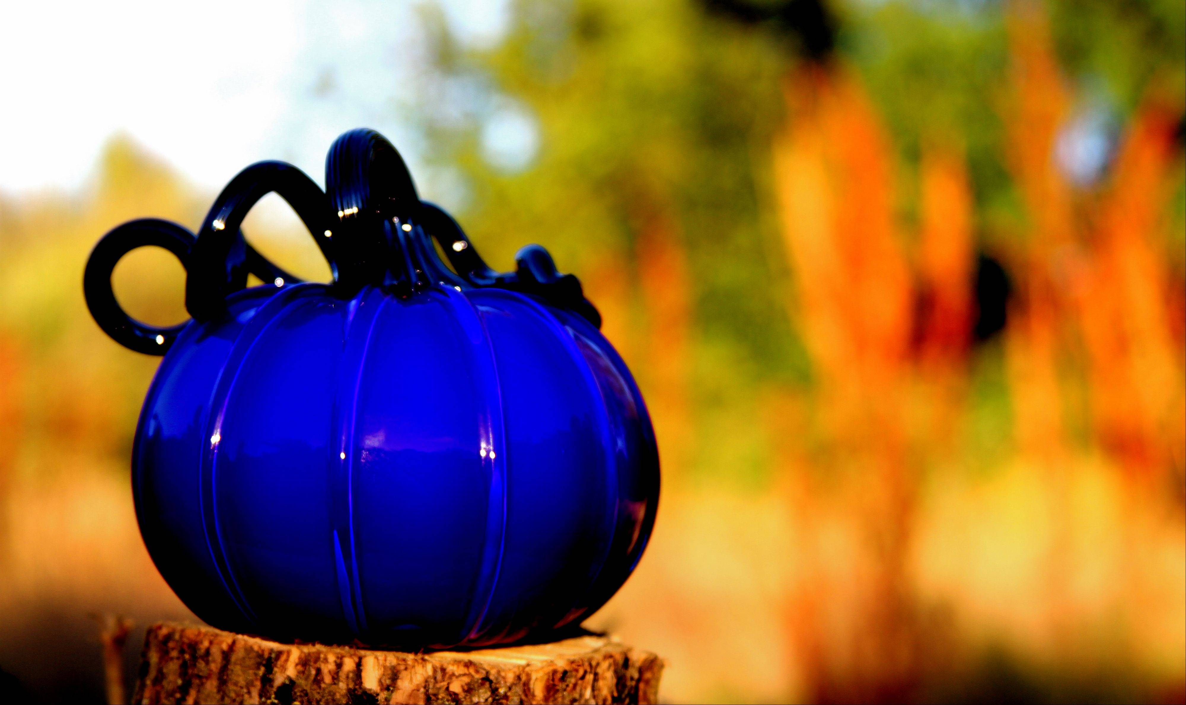 Glass pumpkins will sparkle from Oct. 16-20 at the Morton Arboretum in Lisle.