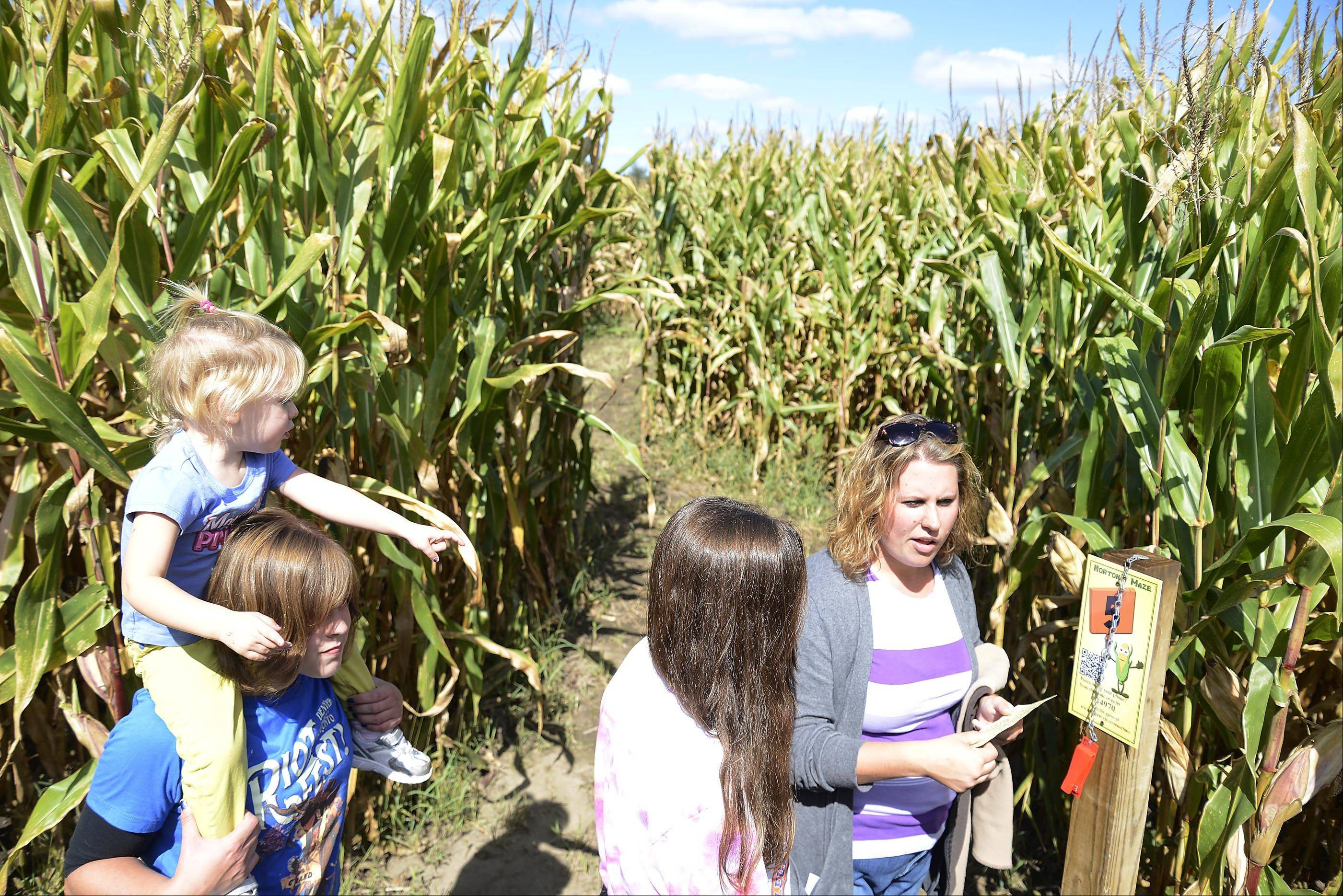 After punching her map at the fifth check point, Jessica Hanson, of St. Charles, decides which way to take her family at the Norton's Produce & Garden Center corn maze.