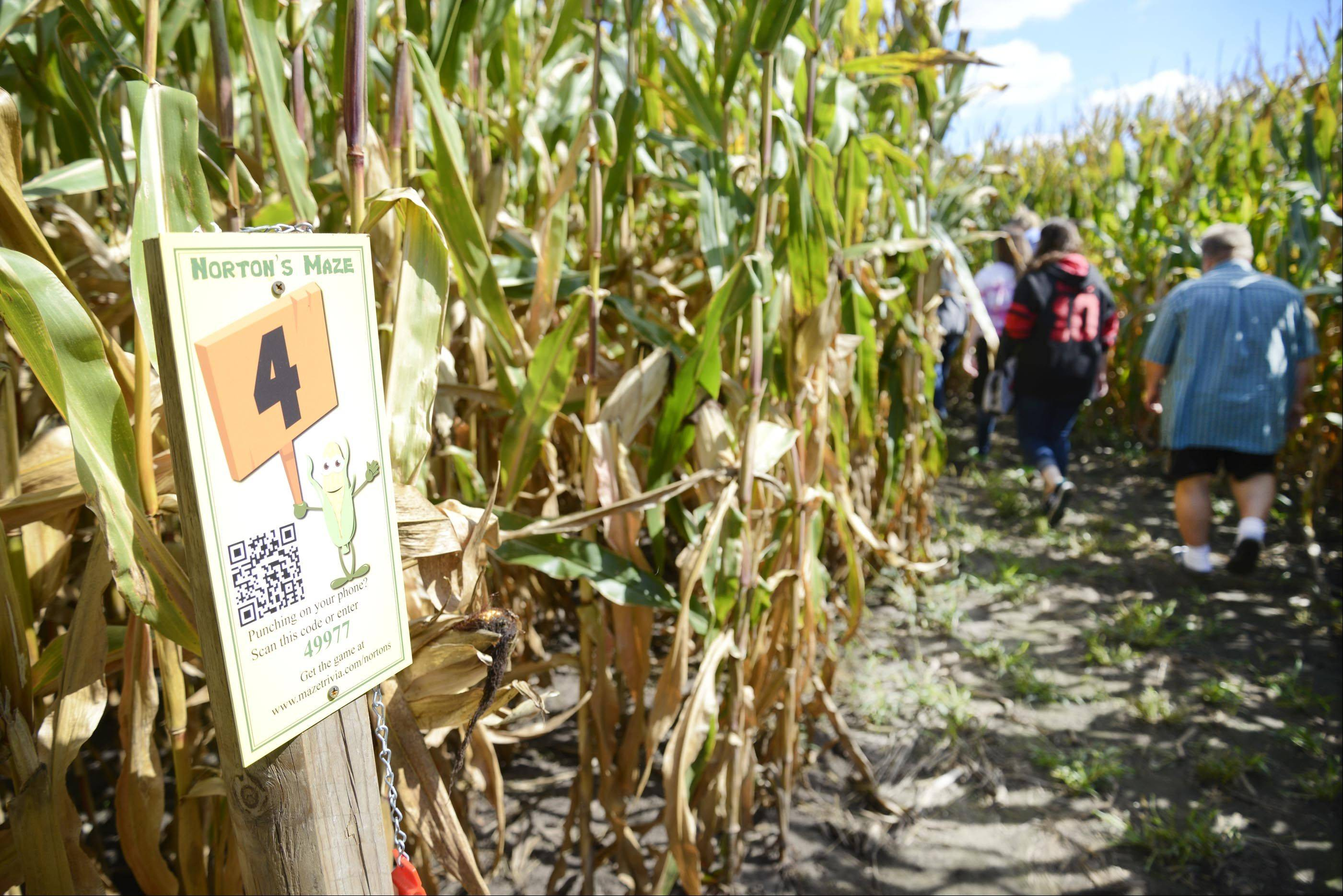 The Norton's Produce & Garden Center corn maze in St. Charles has check points to challenge visitors.