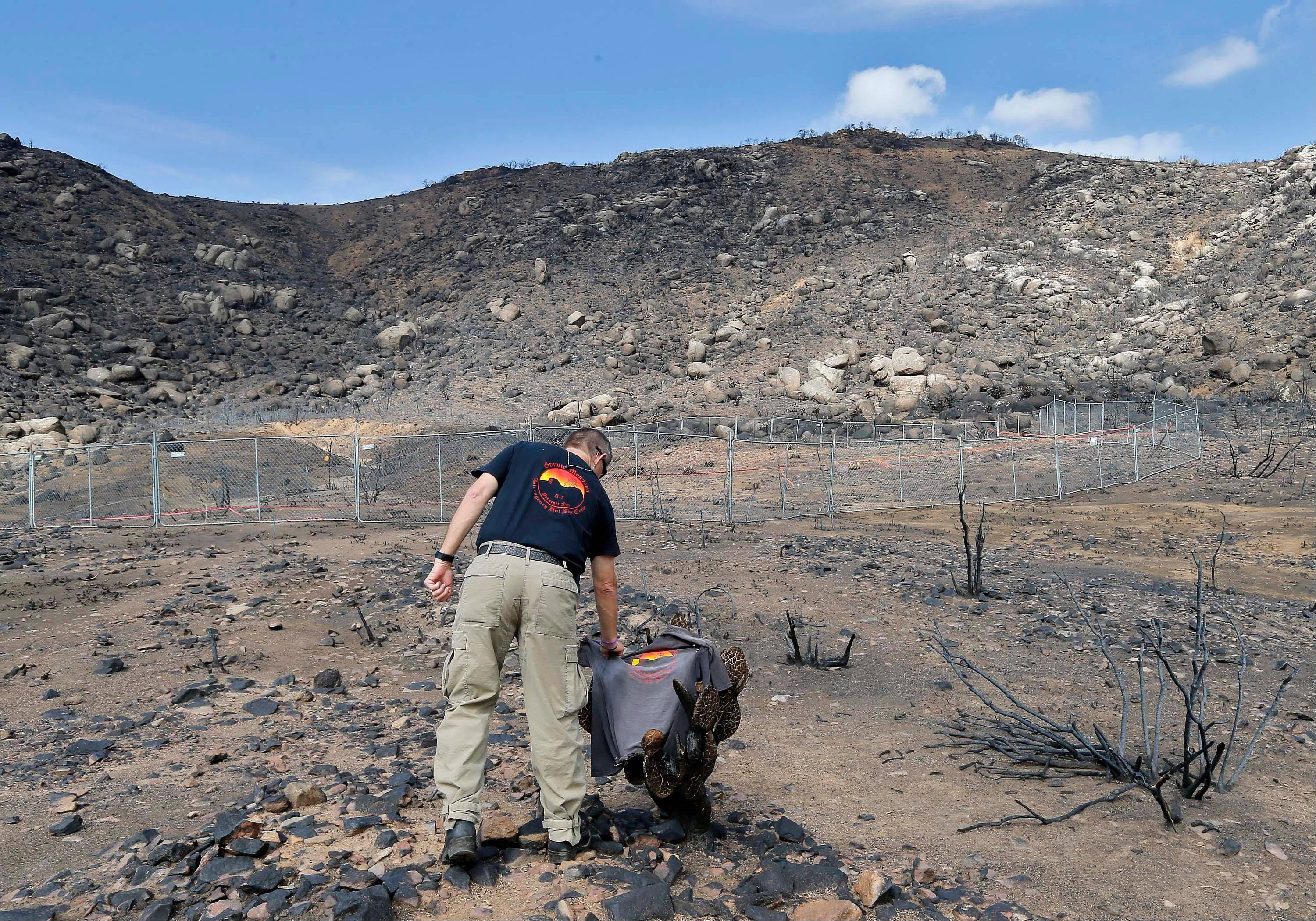 Prescott Wildland Division Chief Darrell Willis touches A Granite Mountain Hot Shots crew shirt draped over a burned cactus, Tuesday, July 23, in Yarnell, Ariz. Investigators released a report Saturday on the deaths of the 19 elite firefighters who became trapped by flames in a brush-choked canyon north of Phoenix.