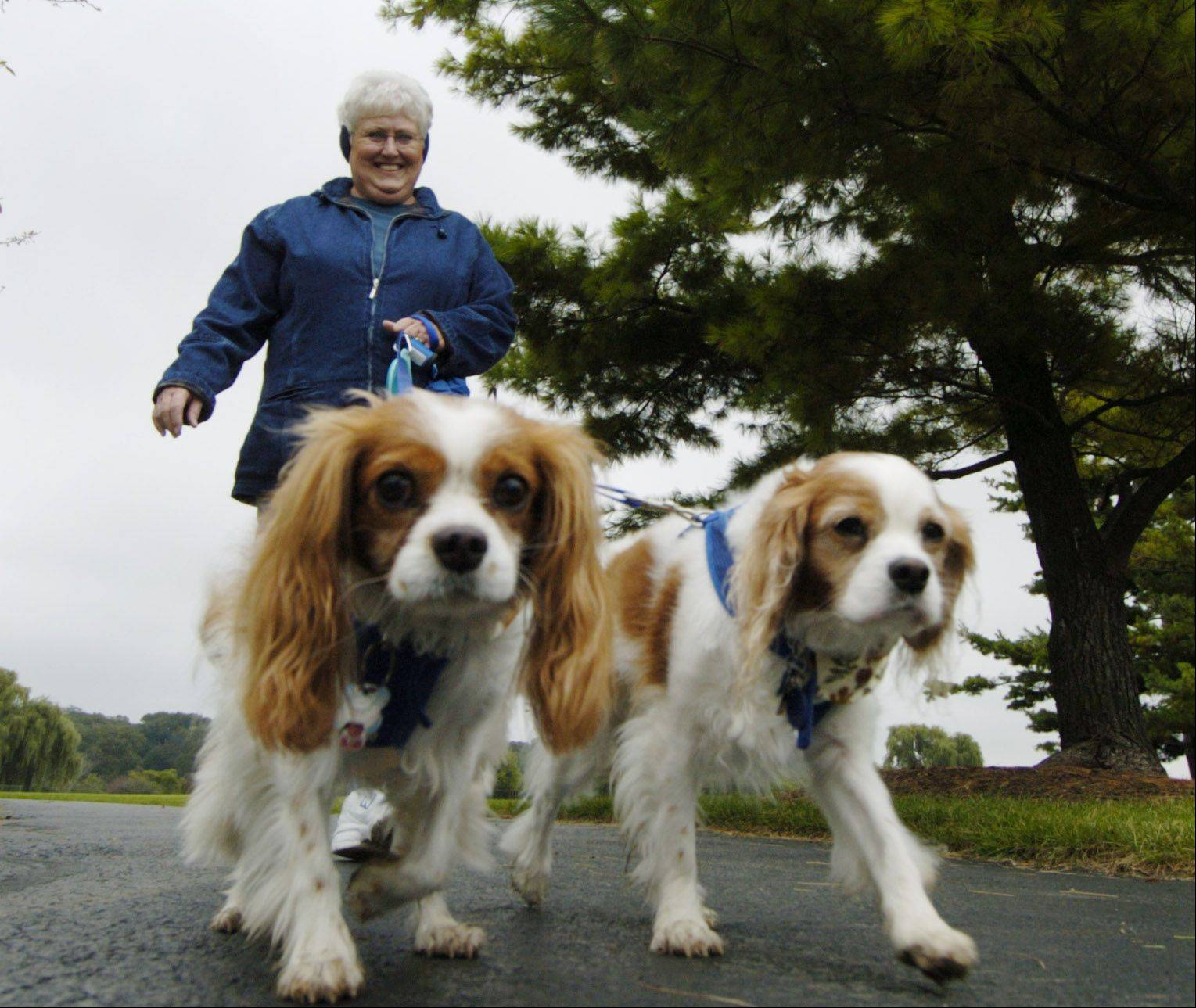 "Marie Brestel of Aurora walked her dogs Monty, left, and Danny during a previous edition of ""Barkapalooza,"" the West Suburban Humane Society's annual dog walk and pet expo at Lisle Community Park."
