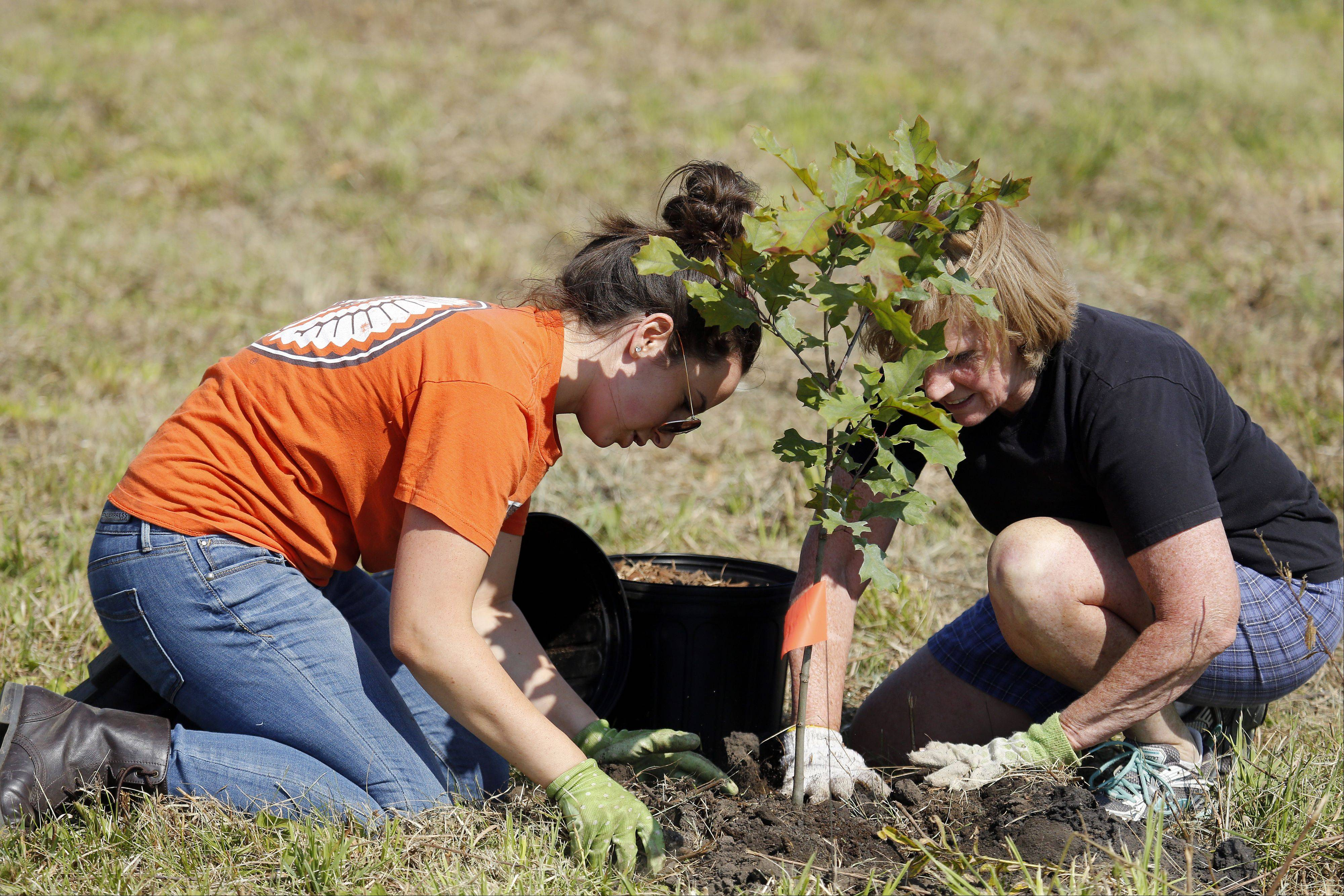 April Venzon and her mom Ann, both of Geneva, put the finishing touches on a red oak that they planted.