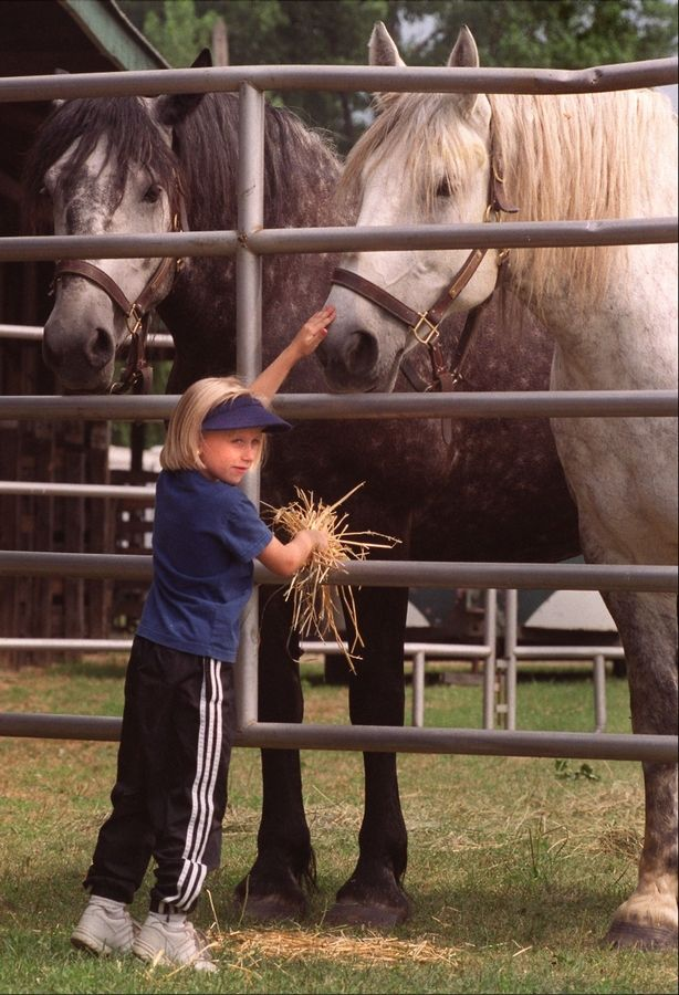 Retired Draft Horses May Get To Stay At Danada