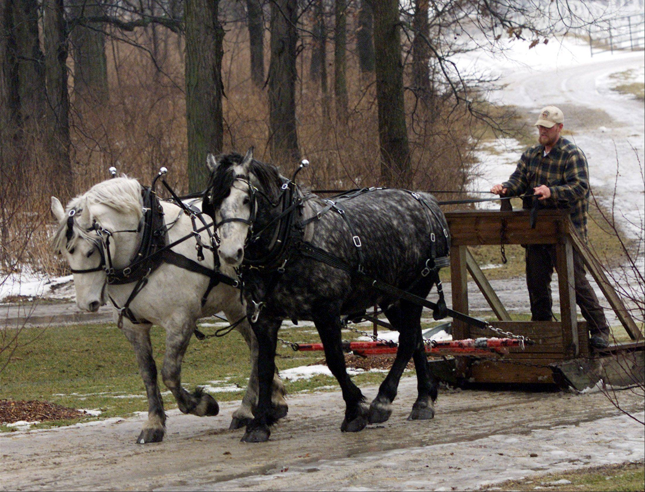 Their sleigh and hayride days behind them, retired mares Rosie, right, and June may get to spend the rest of their lives greeting visitors to the Danada Equestrian Center.
