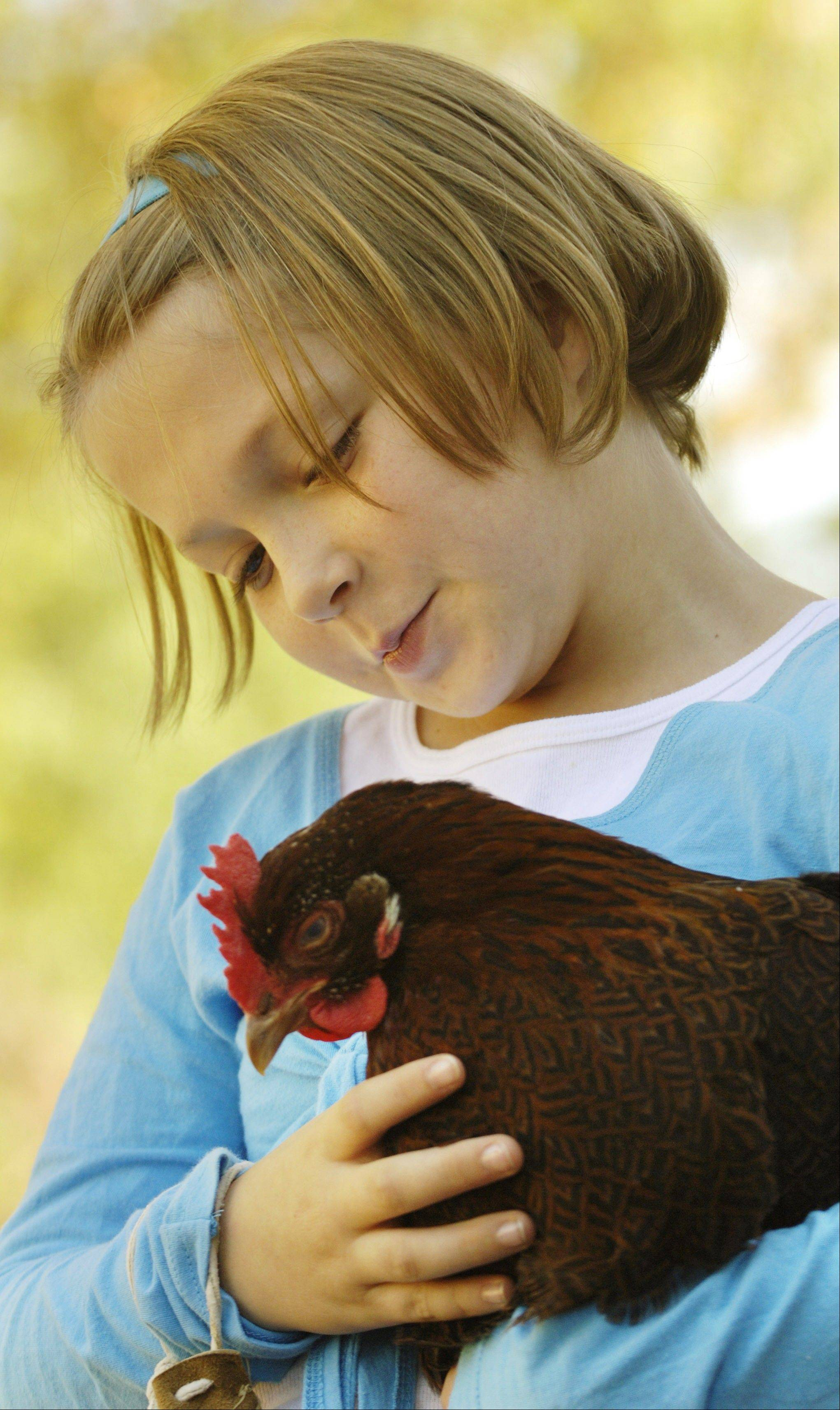 "Allison Ortlund, 9 of Aurora holds ""Ruby,"" a standard cochin hen during a previous Harvest Days festival at Garfield Farm Museum."