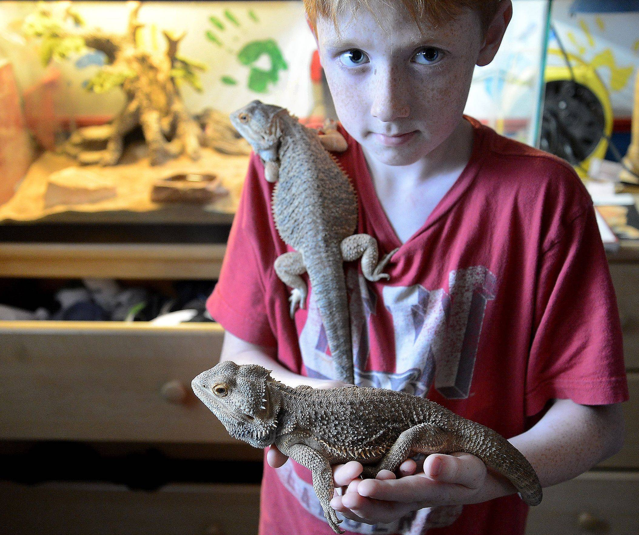 Henry Gabriel, 10, holds Gabriel, left, and Lenerd, his 1½-year-old bearded dragons.