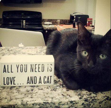 Adopted stray kitten Oliver, owned by Hannah Horvath in Miami, rests next to a sign that speaks volumes!