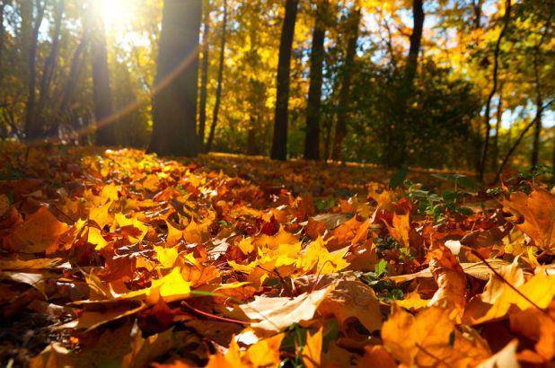 Fall is the best time to ready your yard for the coming winter, according to Davey Tree Experts.