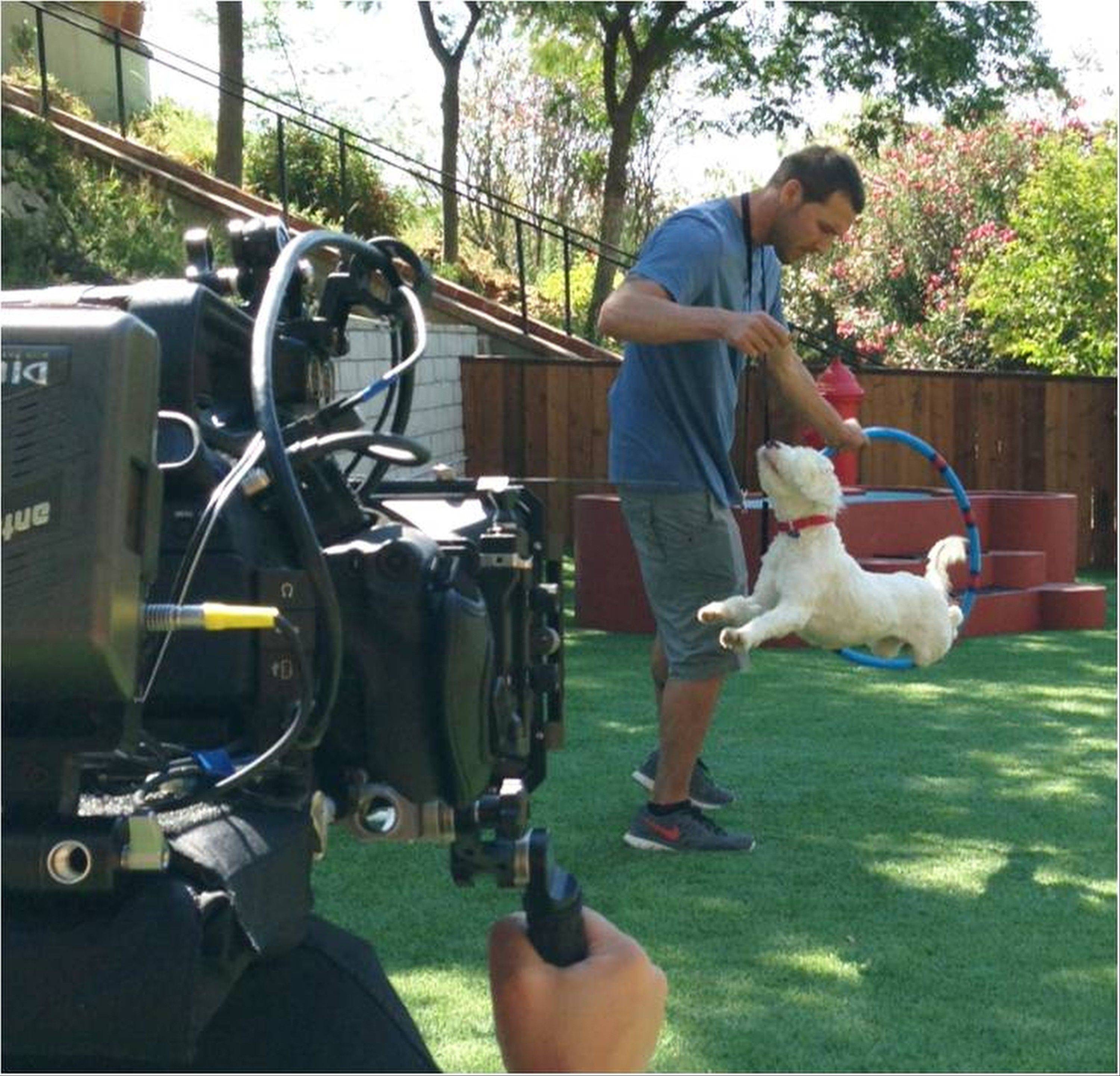 "Animal expert Brandon McMillan, animal trainer and host of the show ""Lucky Dog,"" trains Willie, a Tibetan Terrier McMillan rescued rescued from a Los Angeles County shelter. McMillan will rescue, train and place 22 dogs in 22 weeks for CBS's 'Lucky Dog,"" which airs Saturday at 8:30 a.m."