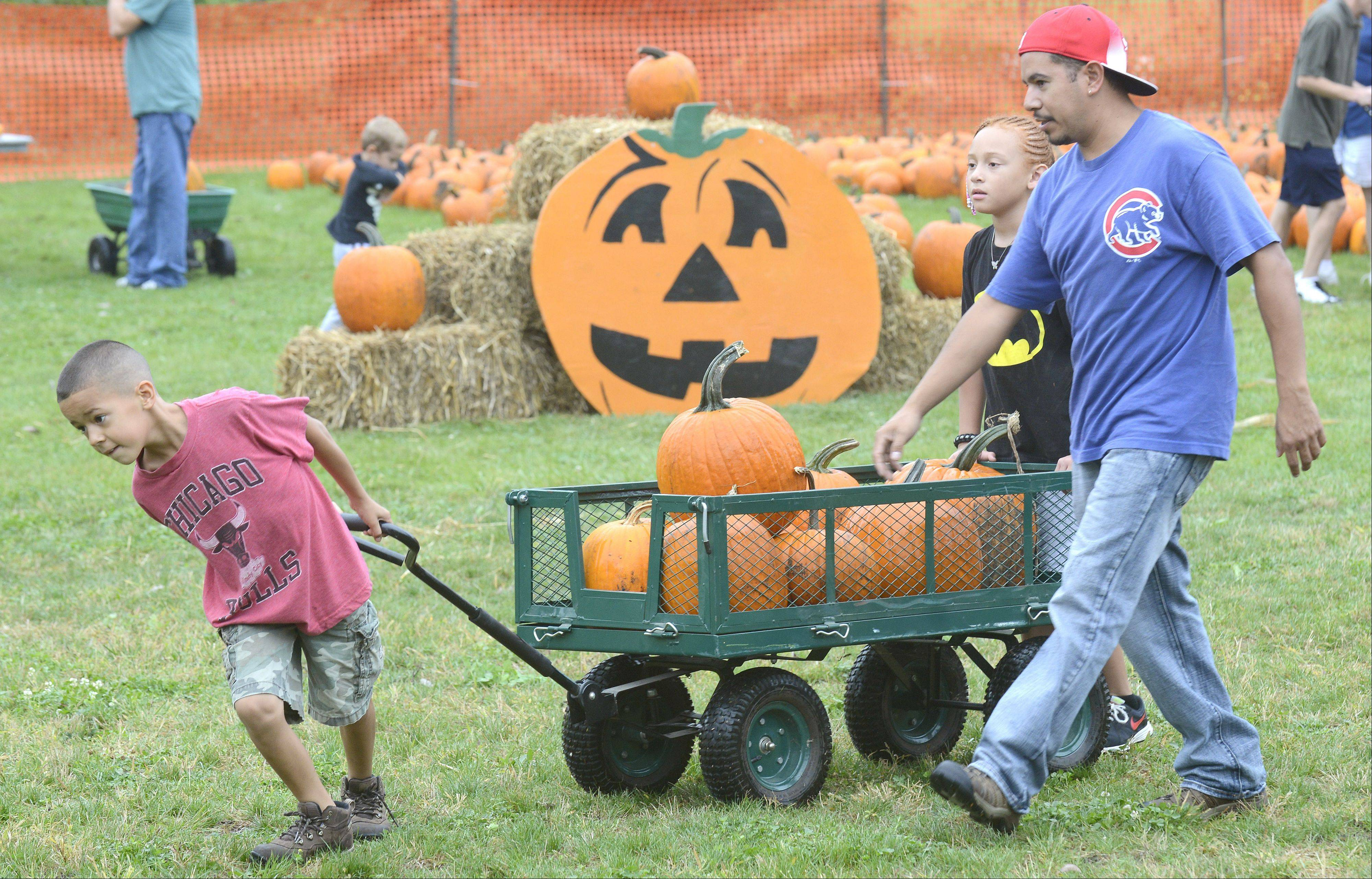 Andre Rios, 8, pulls his family's pick of pumpkins back from the patch along with his father, Angel, and cousin Zoie Lewis, 8, all of South Elgin, at the city's annual Fall Festival on Saturday. While on their way to their truck, Andre kept veering off the path toward a table full of doughnuts being sold by South Elgin policemen. The family comes to the event every year.