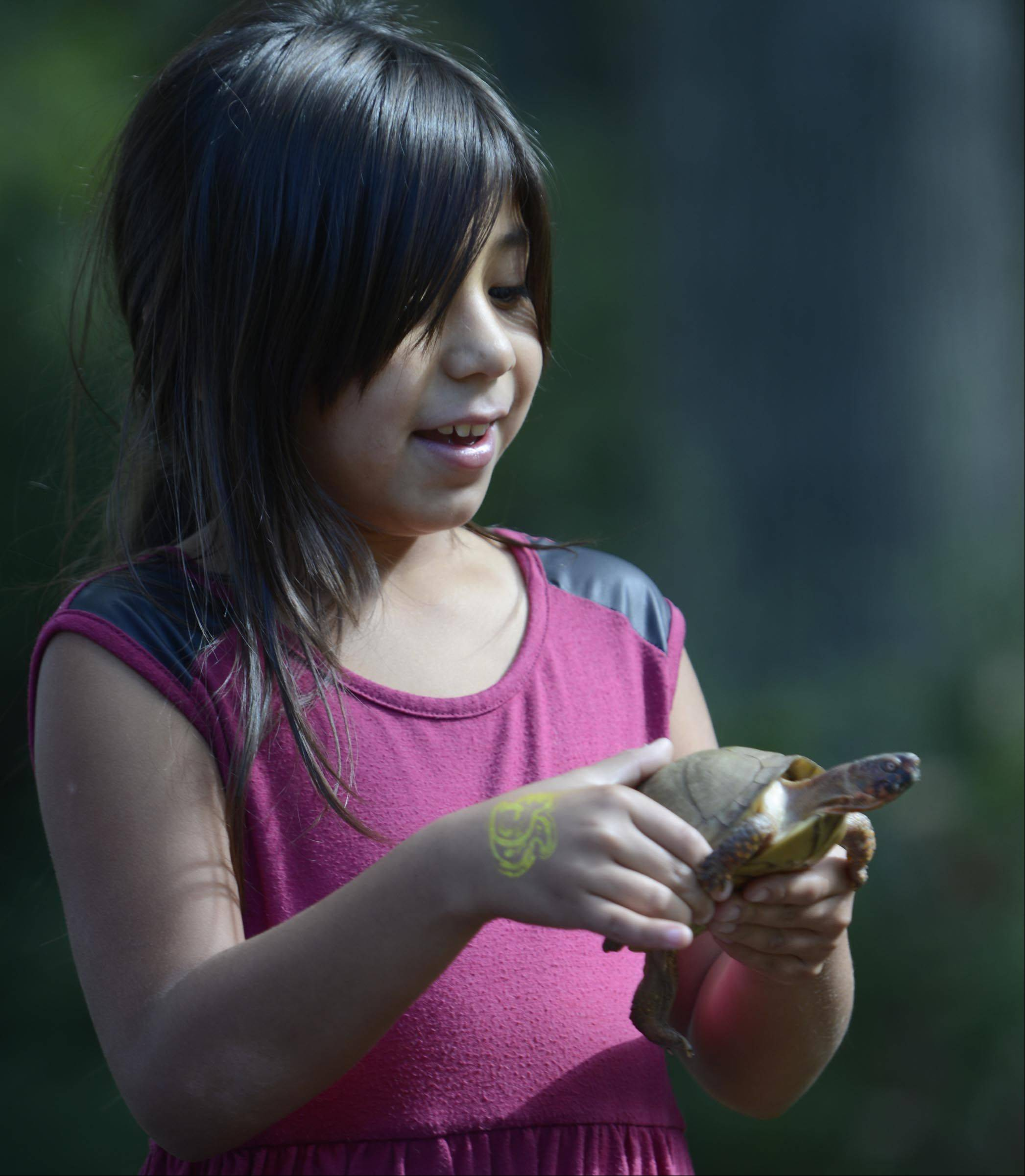 Sophia Finch, 8, holds a three-toed box turtle named Toby, Sunday at the Fox Valley Wildlife Center Open House in the Elburn Forest Preserve, west of Elburn on Route 38. She is from Geneva and was with her brother Robert, 11, and mother Alyce, who is a volunteer at the center.