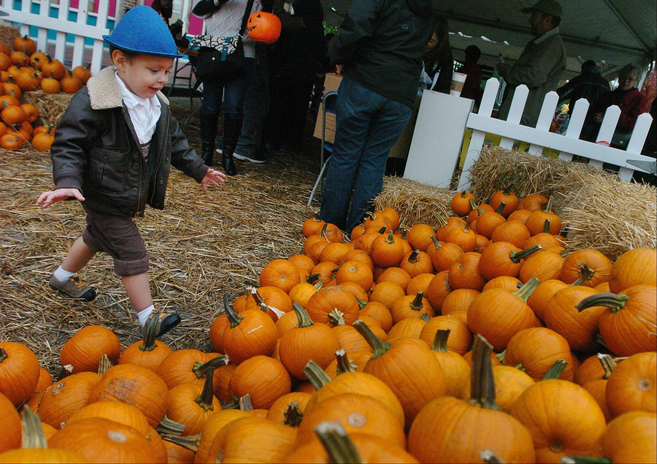 Ryan Putz of Wheeling can�t wait to pick out a pumpkin to paint at the 2012 Mount Prospect Fall Fest.