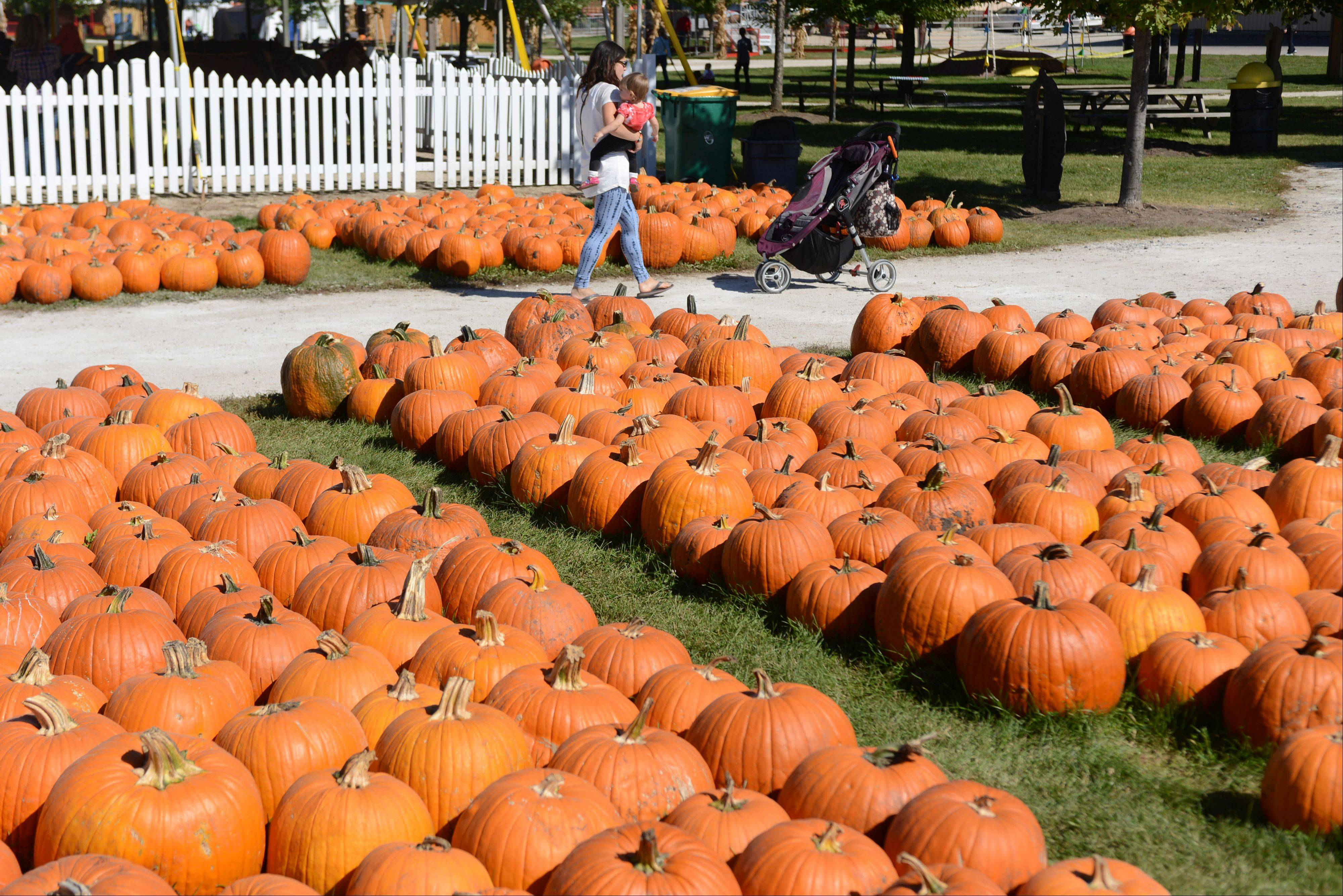 Didier Farms on Aptakisic Road in Lincolnshire is stocked with plenty of pumpkins.