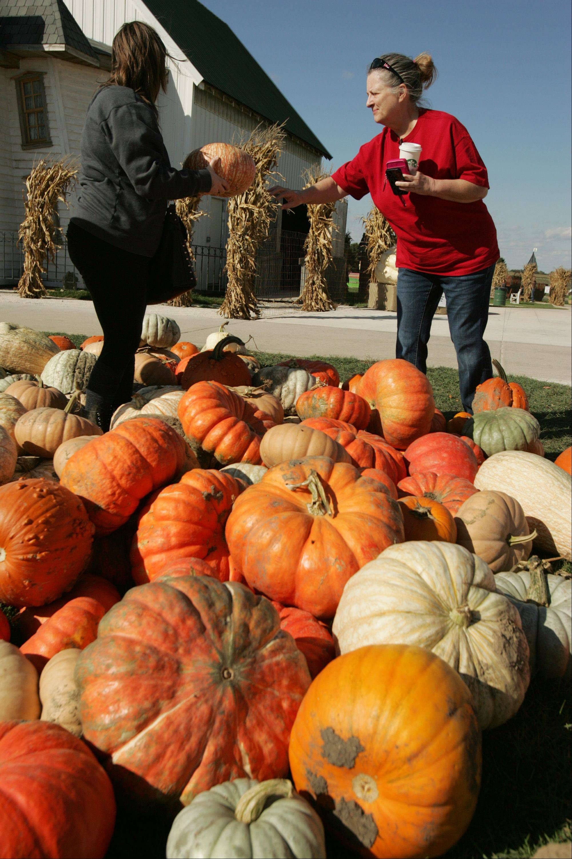 Vicki Hynes, right, and her daughter Jessica pick out just the right pumpkins Monday afternoon at Goebbert's Pumpkin Patch in Hampshire. The Hyneses live in Roselle.