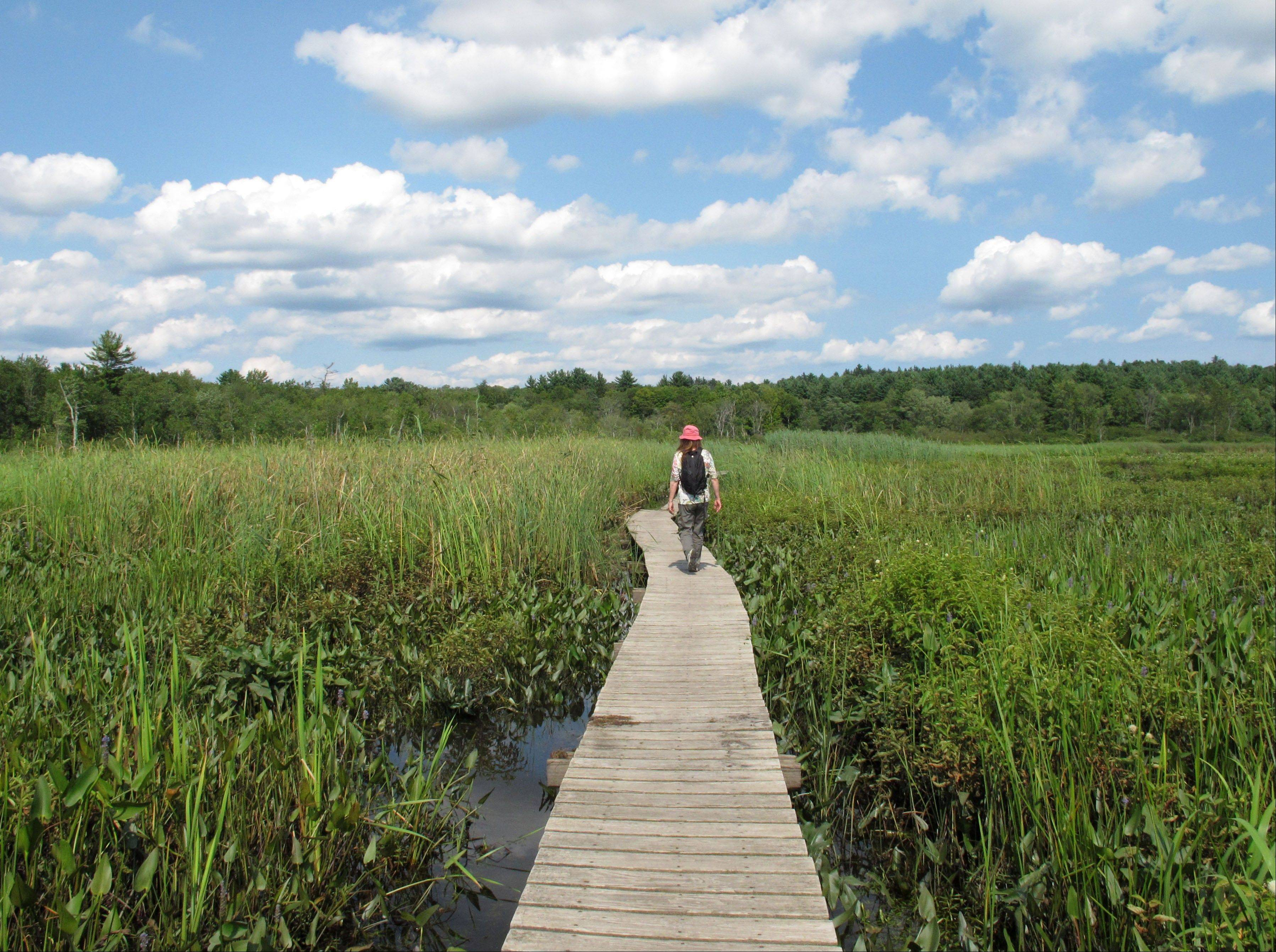 Hiker Marianne Denniston walks across the boardwalk of the Little Pond marsh trail at the White Memorial Conservation Center in Litchfield, Conn. The wildlife sanctuary, which is set among 4,000 acres of fields, ponds and woodland, offers a nature museum, campgrounds, boating and bird-watching.