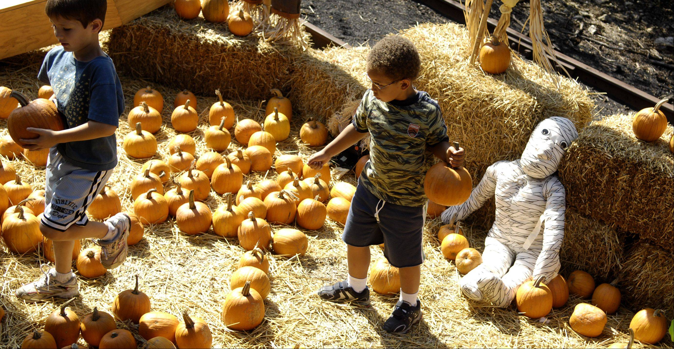 Popular with families, the Fox River Trolley Museum's Pumpkin Trolley offers a ride to the pumpkin patch.
