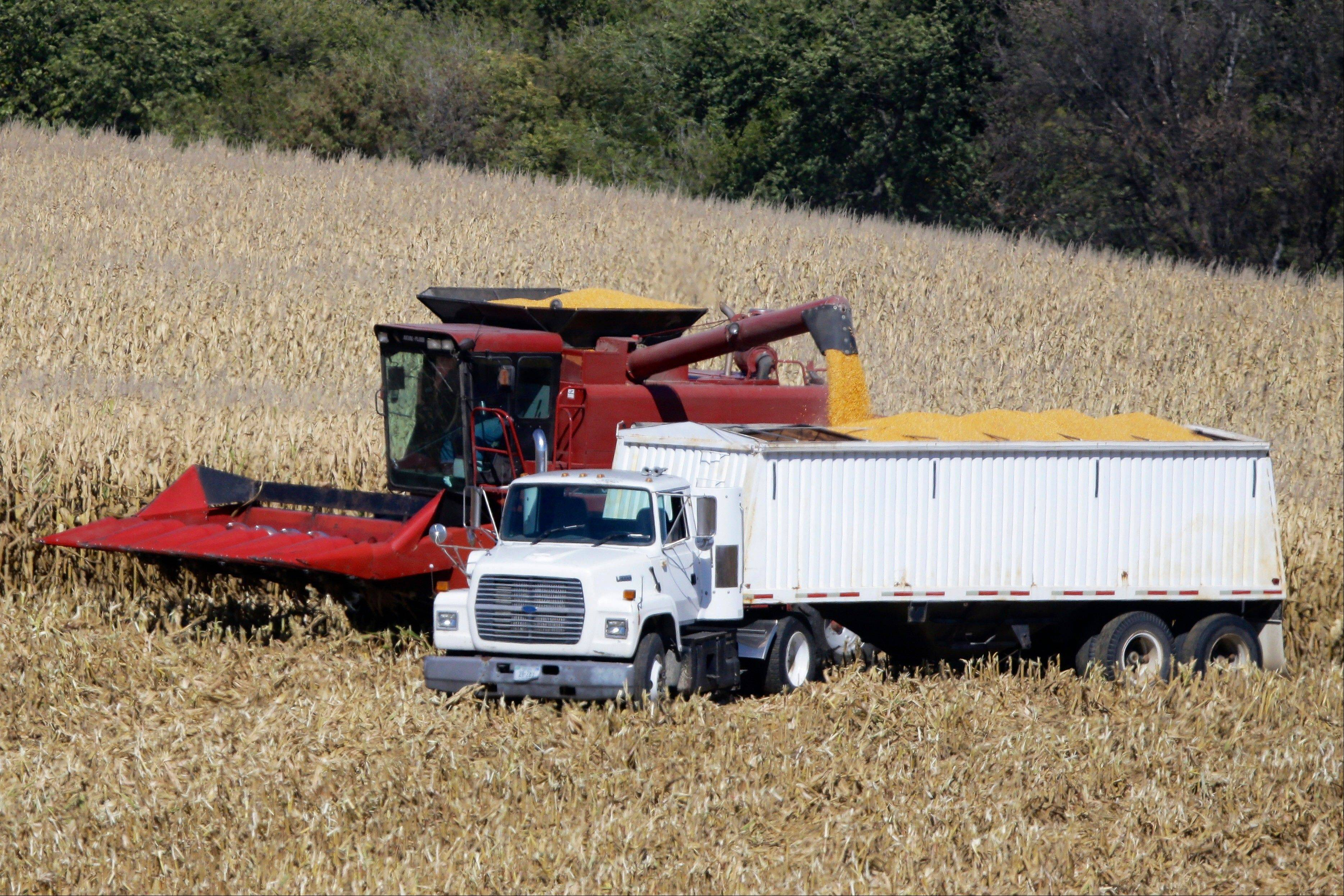Roger Larsen transfers his harvested corn Thursday onto a grain truck in Fort Calhoun, Neb.