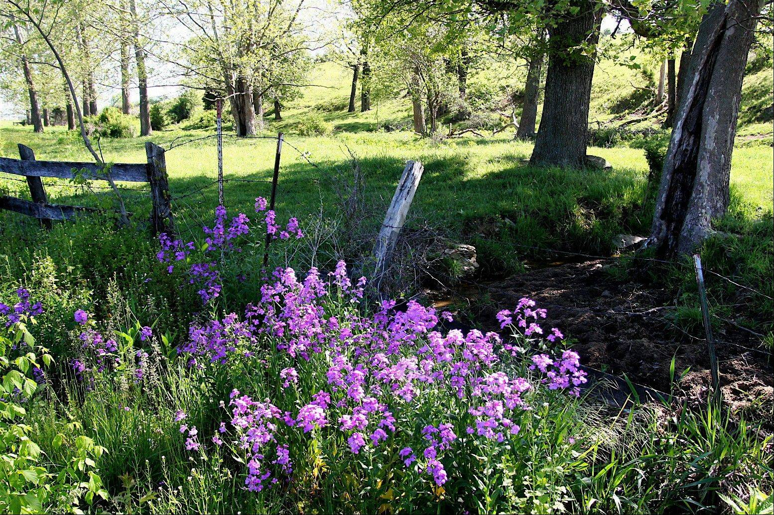 Phlox daisies are among the many meadow flowers that can thrive in traditional landscapes -- even in city settings. Prairie garden combinations include flowers, shrubs and trees. They require little attention, add year-round color and interest and provide wildlife-friendly habitat.