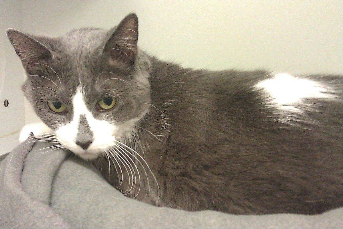 Honey, a 4-year-old female, is seeking a forever home.
