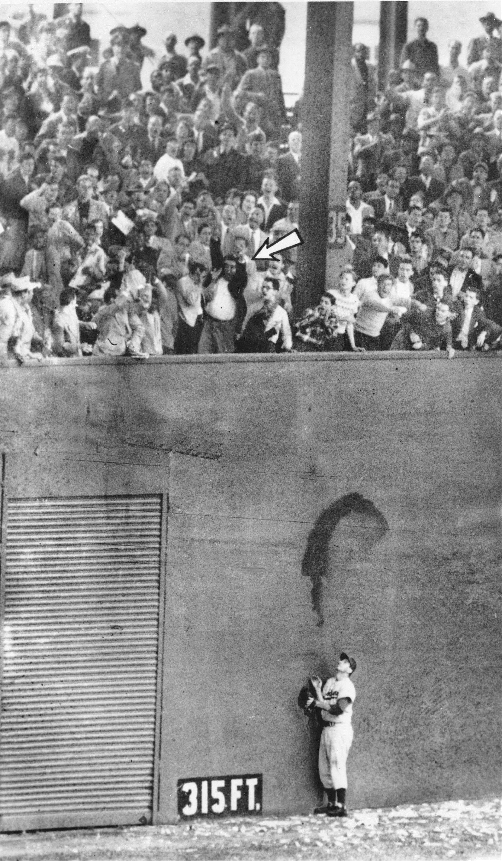 "In a scene befitting a Cubs legend, Andy Pafko is the Brooklyn Dodgers left fielder who watches helplessly as Bobby Thomson's ""shot heard around the world"" sails over his head to win the 1951 pennant for the rival New York Giants."