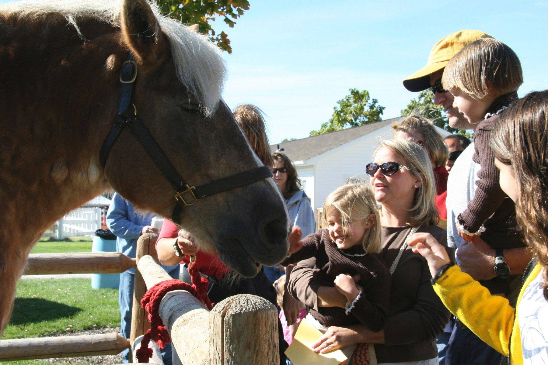 The Danada Fall Festival features resident and guest horses, and annually draws a crowd of more than 12,000.
