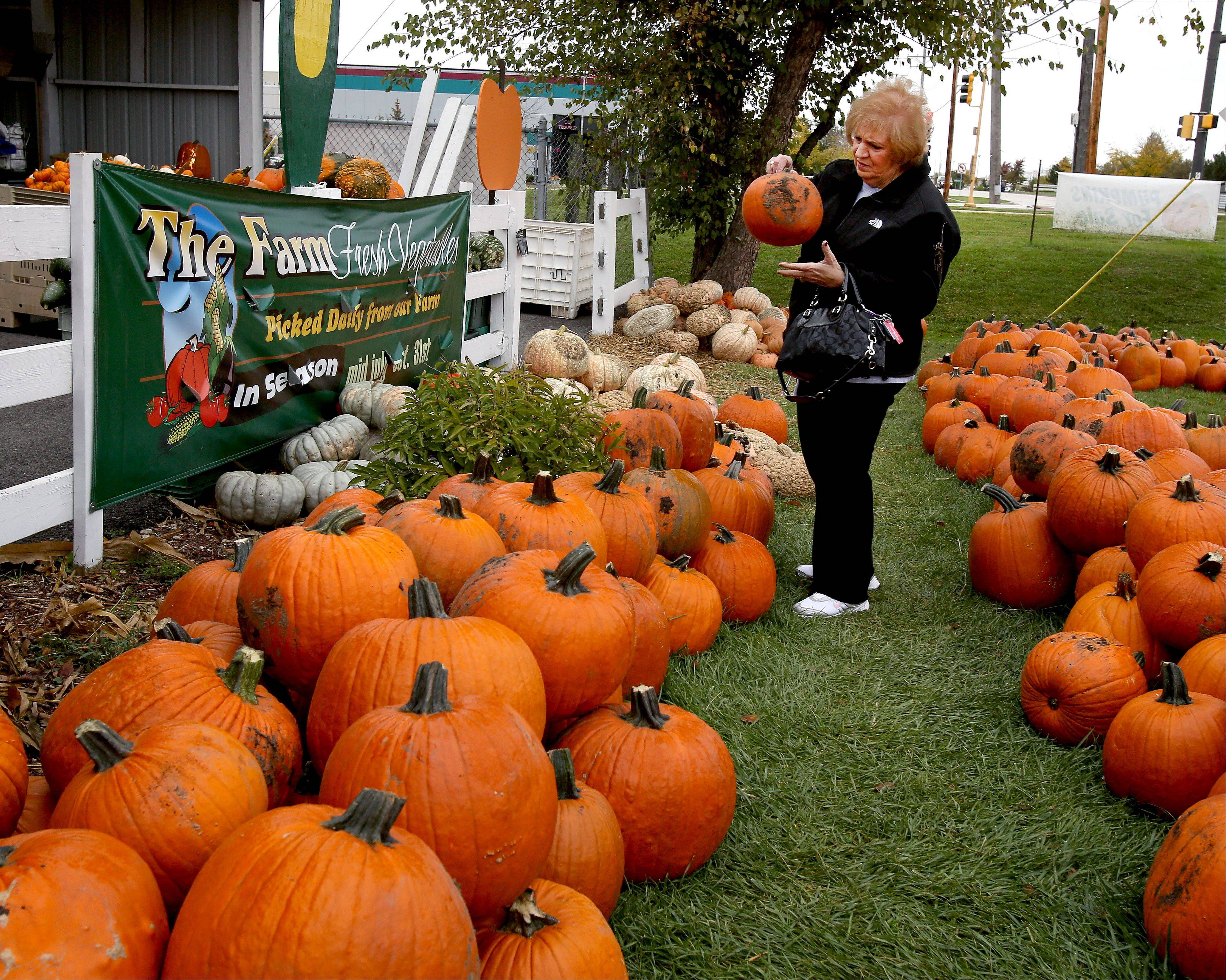 Joanne Karris of Carol Stream picks out a pumpkin for her grandchildren during a trip to The Farm in Carol Stream, which is celebrating its 50th year selling fresh seasonal produce in DuPage County.