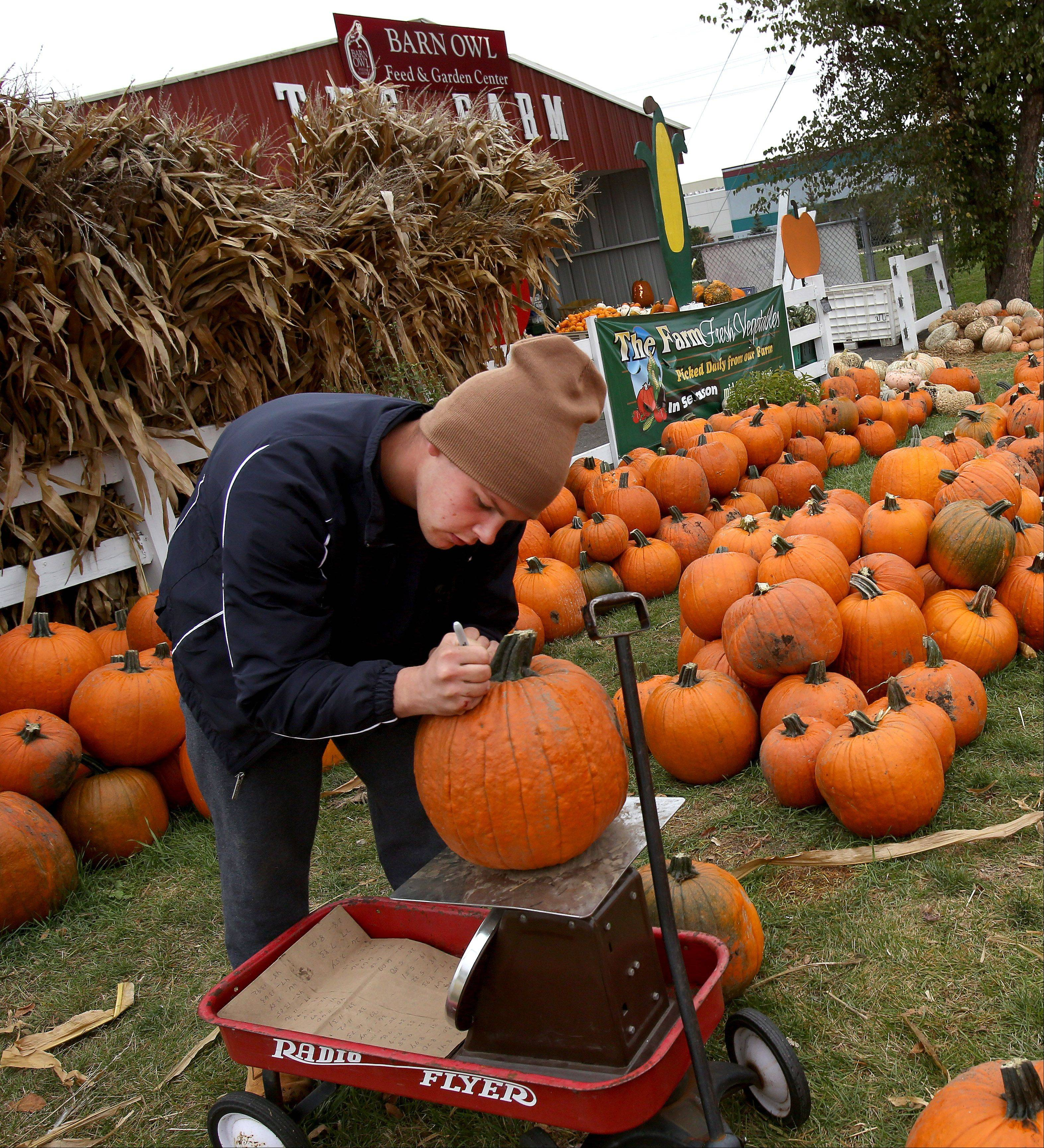 Employee Zach Dvorak weighs the pumpkins at The Farm in Carol Stream.