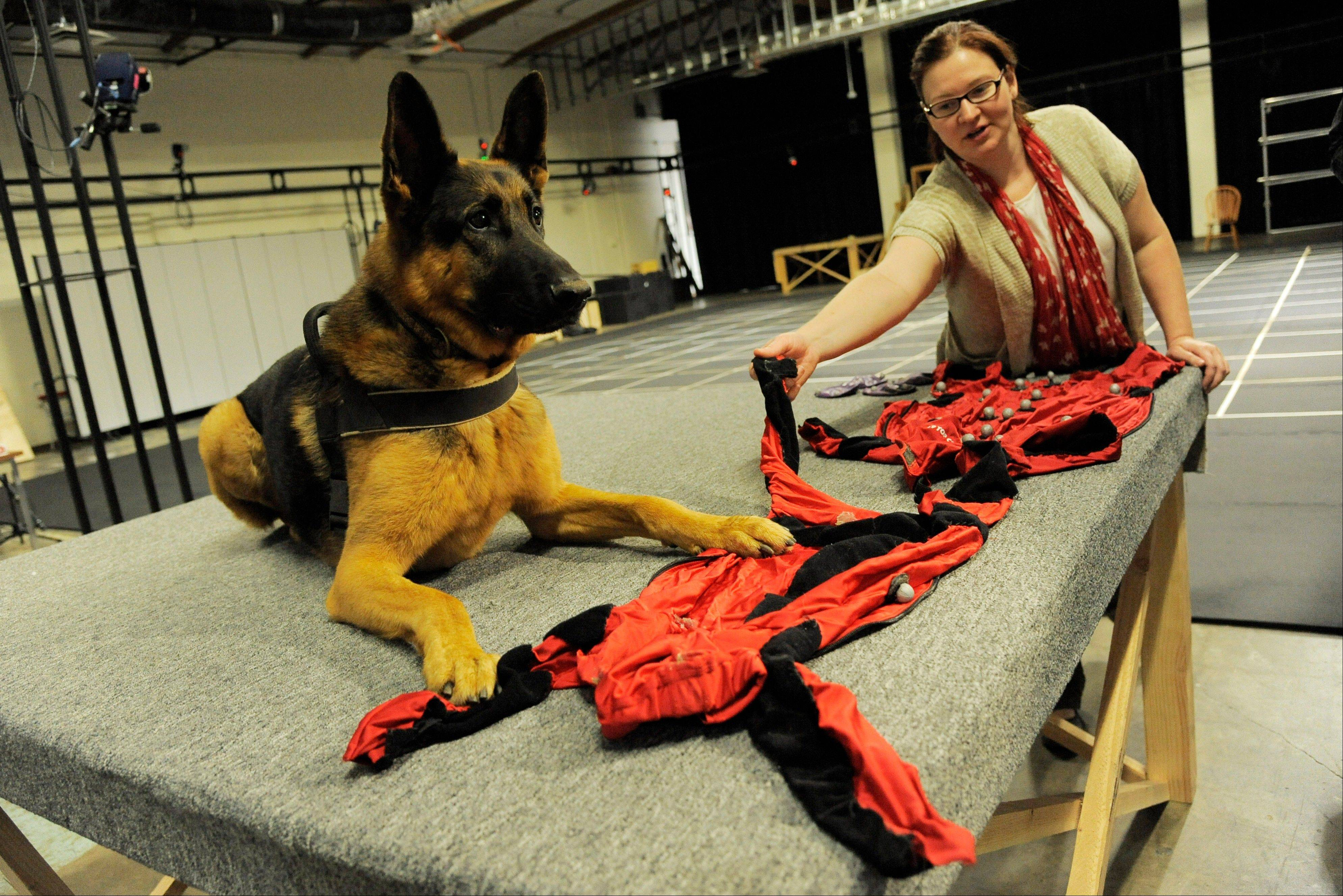 Motion capture supervisor Kristina Adelmeyer shows off the motion capture sensors worn by the dog Rugger in capturing his movements for video game footage, at Neversoft Motion Capture Studio in Los Angeles.