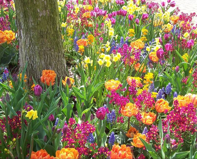 Art in the garden how to plant bulb groupings for a for Spring bulb garden designs