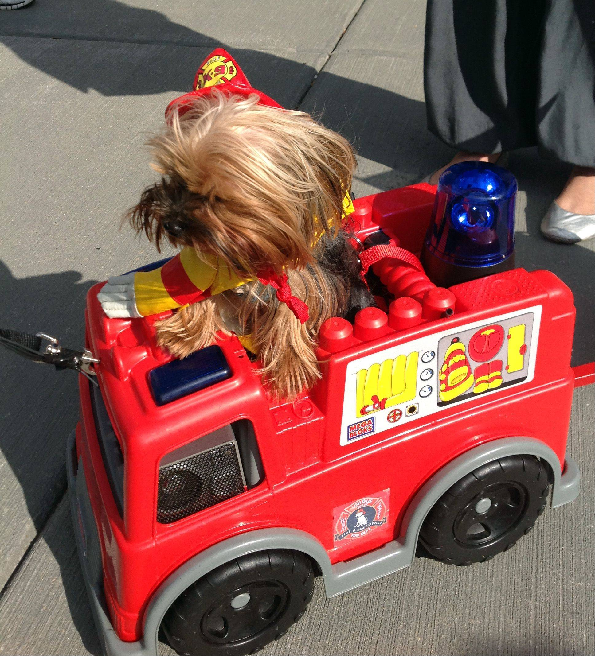 Hairy Pawter, a Yorkshire terrier from Streamwood, won the fan favorite award Saturday during the pet costume contest and parade that kicked off the Hoots and H'owls Halloween event at Randhurst Village. Pawter was dressed as a firefighter and rode in a tiny fire truck that squirted water. He also models, works as a therapy dog and has his own business card.